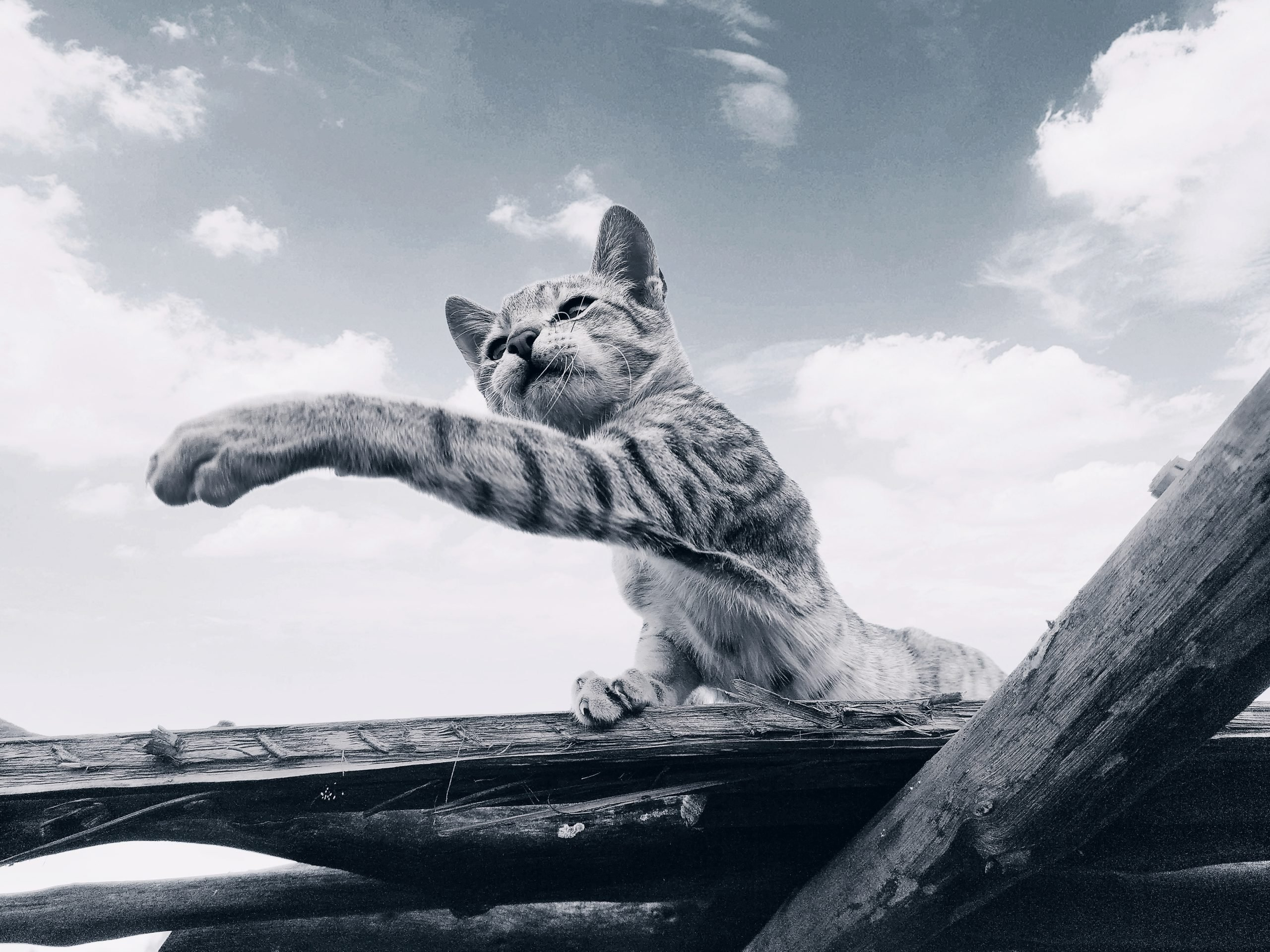 Cat on the wood plank