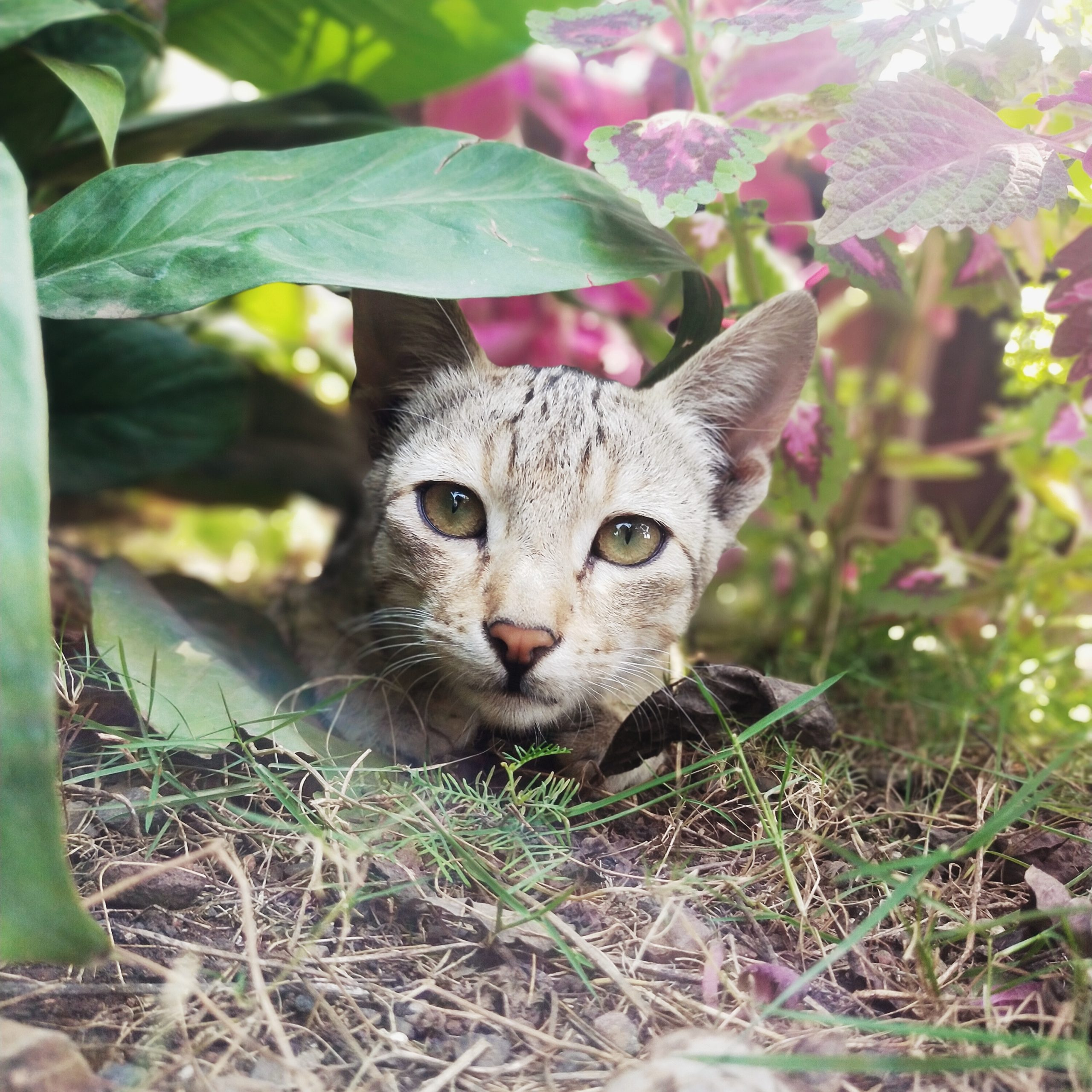 Cat under the plant in the garden