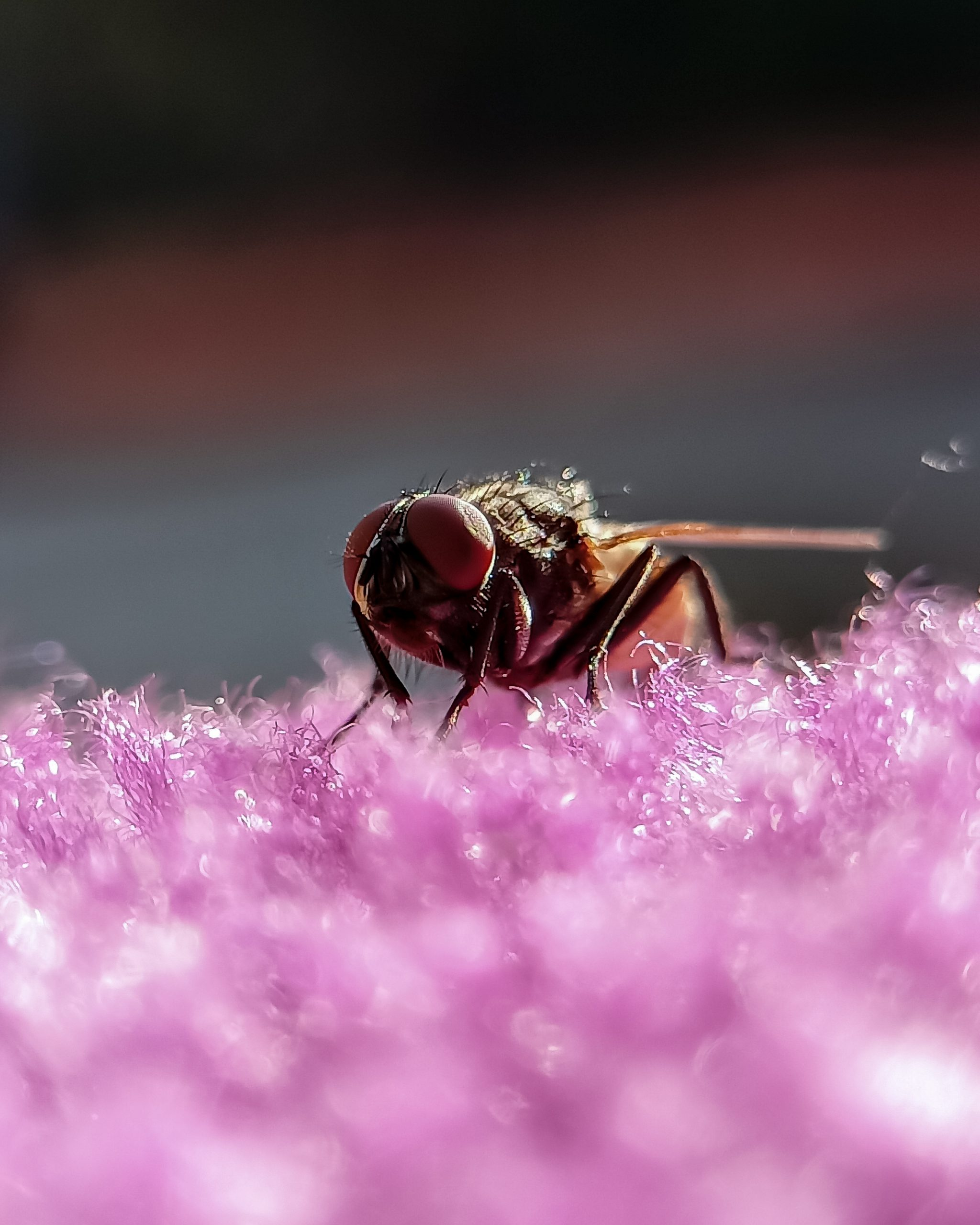 Close up of housefly