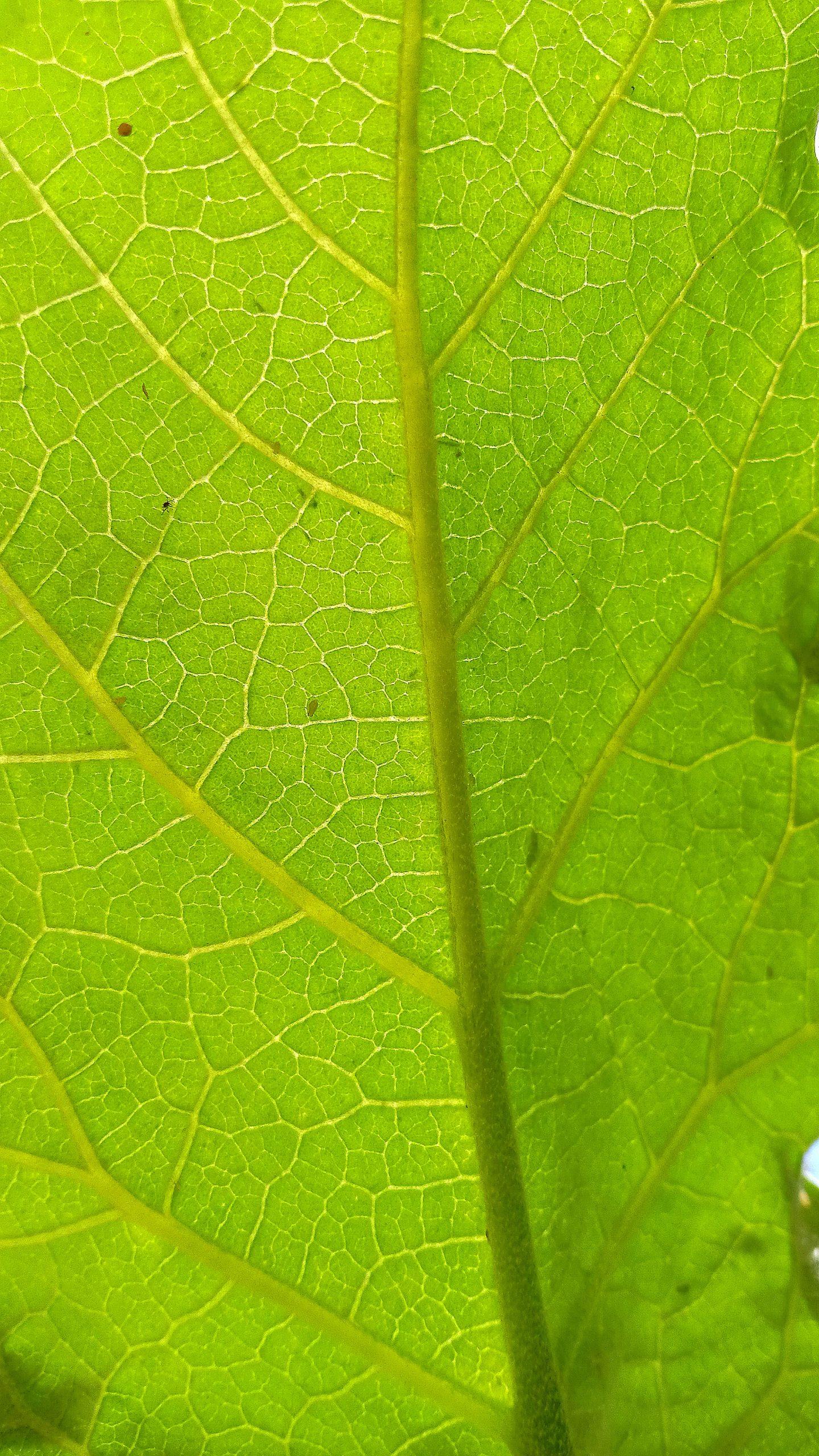 Closeup of a green leaf