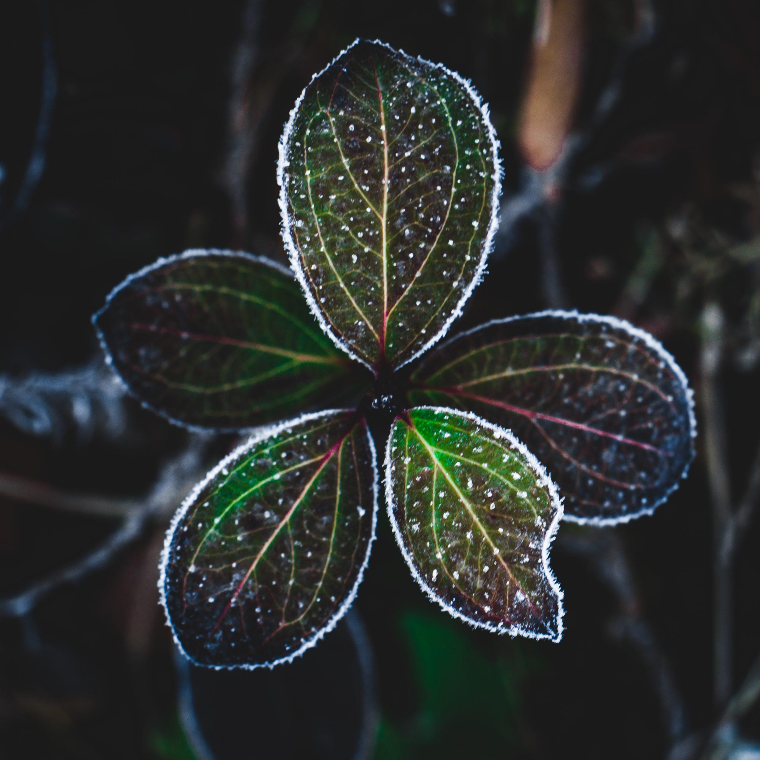 Colorful leaves in dark