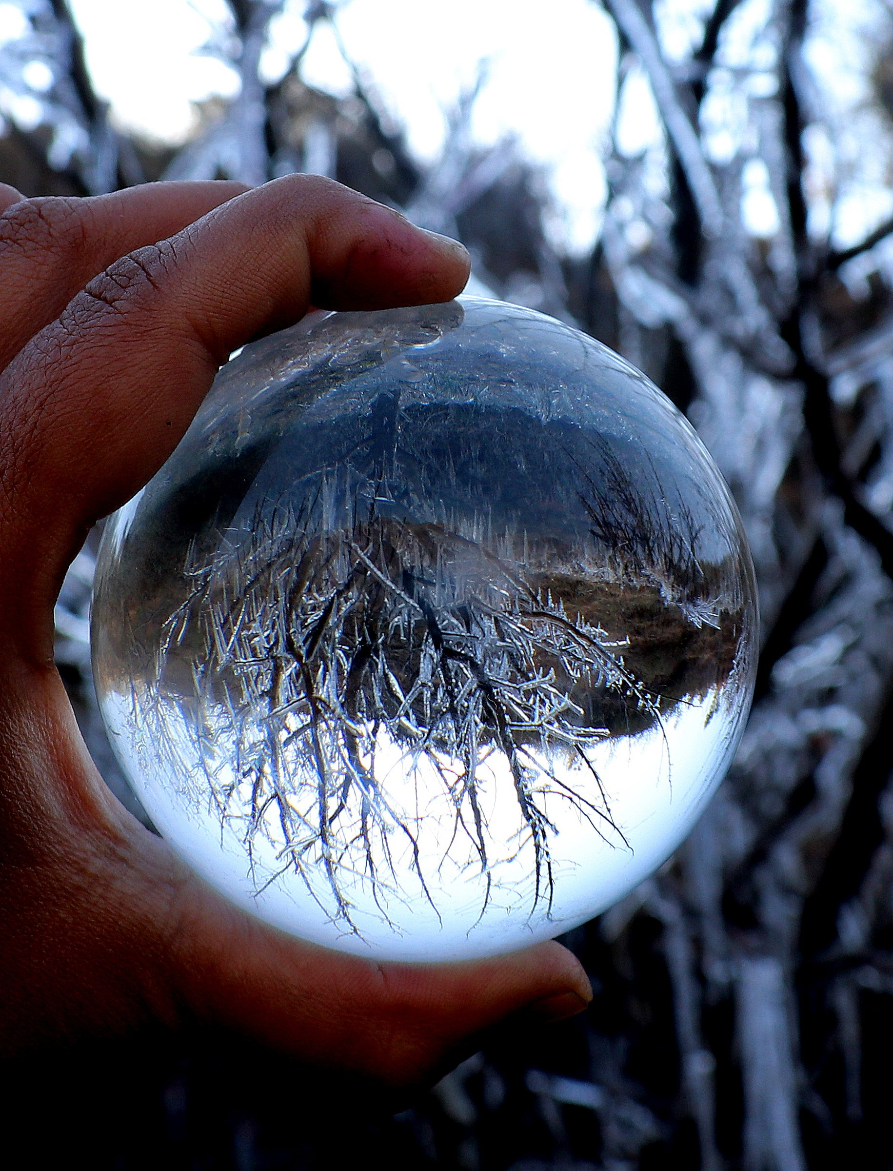 Trees reflection on Crystal ball