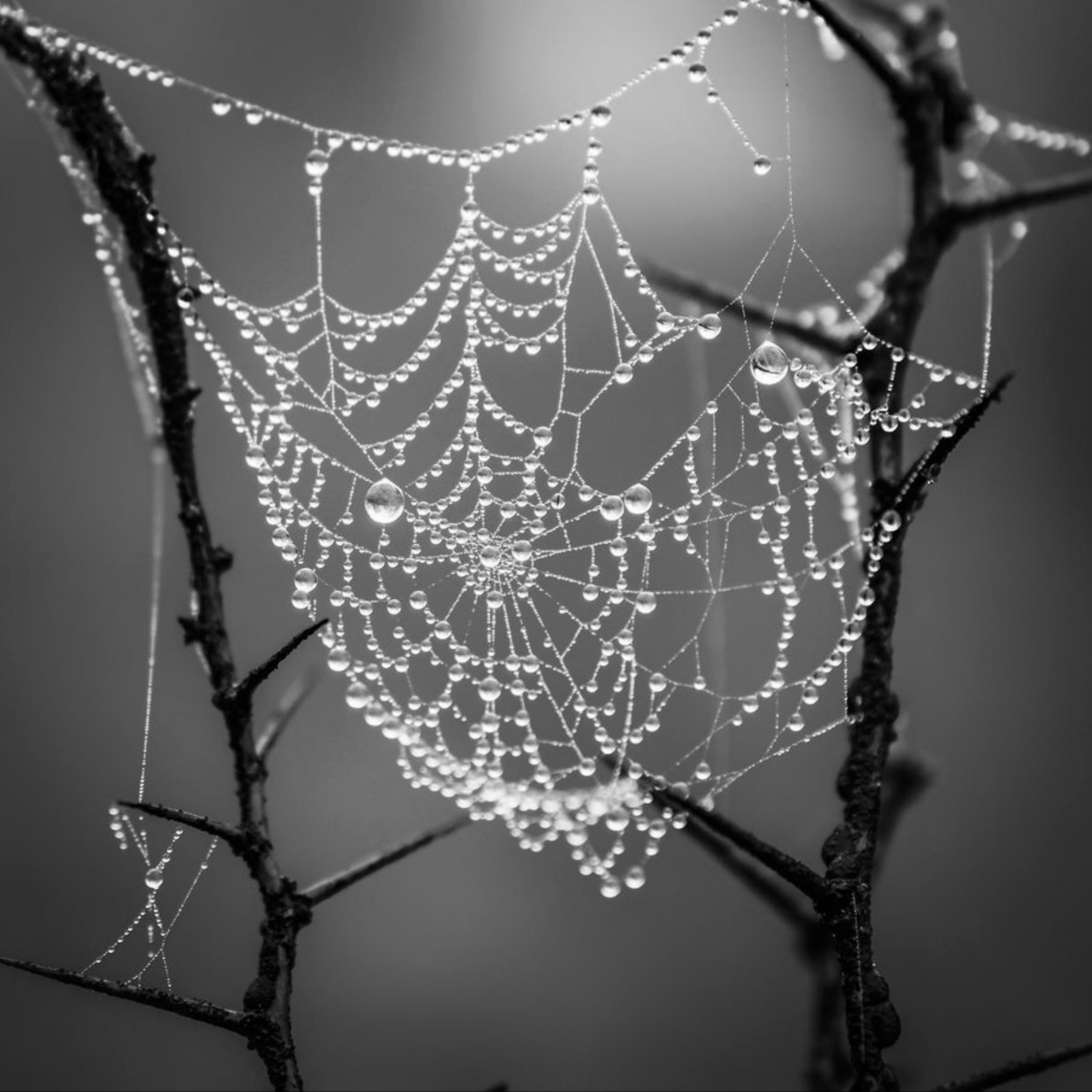 Dew drops on a spiderweb