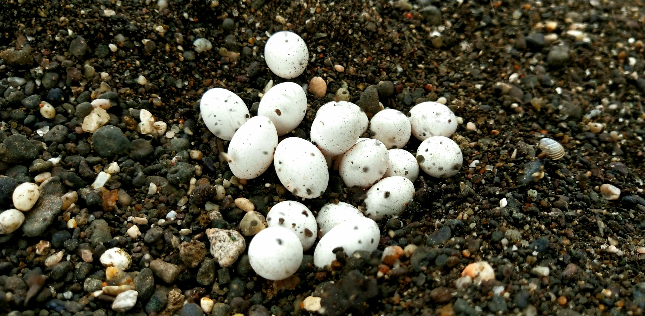 Eggs on soil