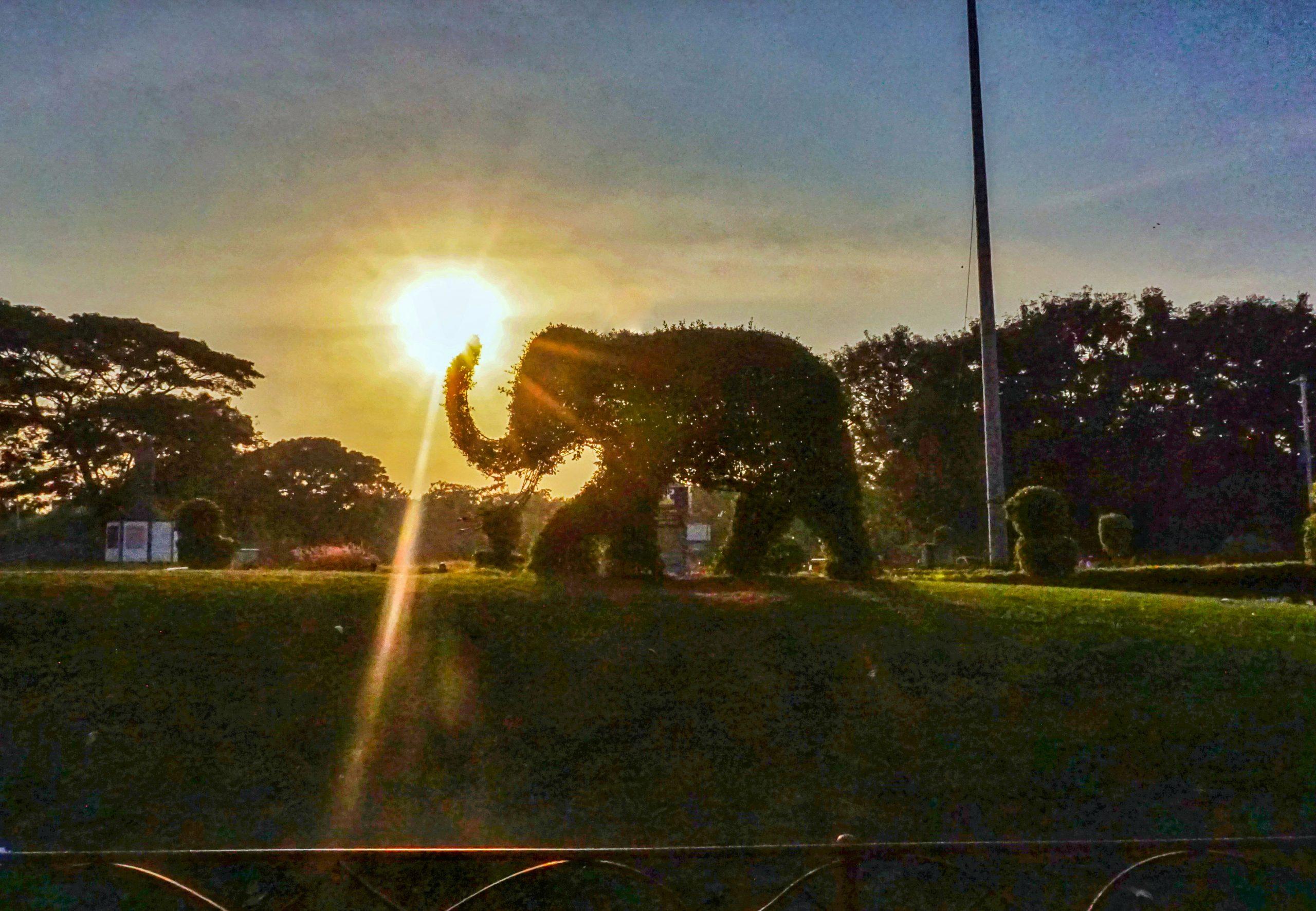 Sunshine on creative Elephant in garden