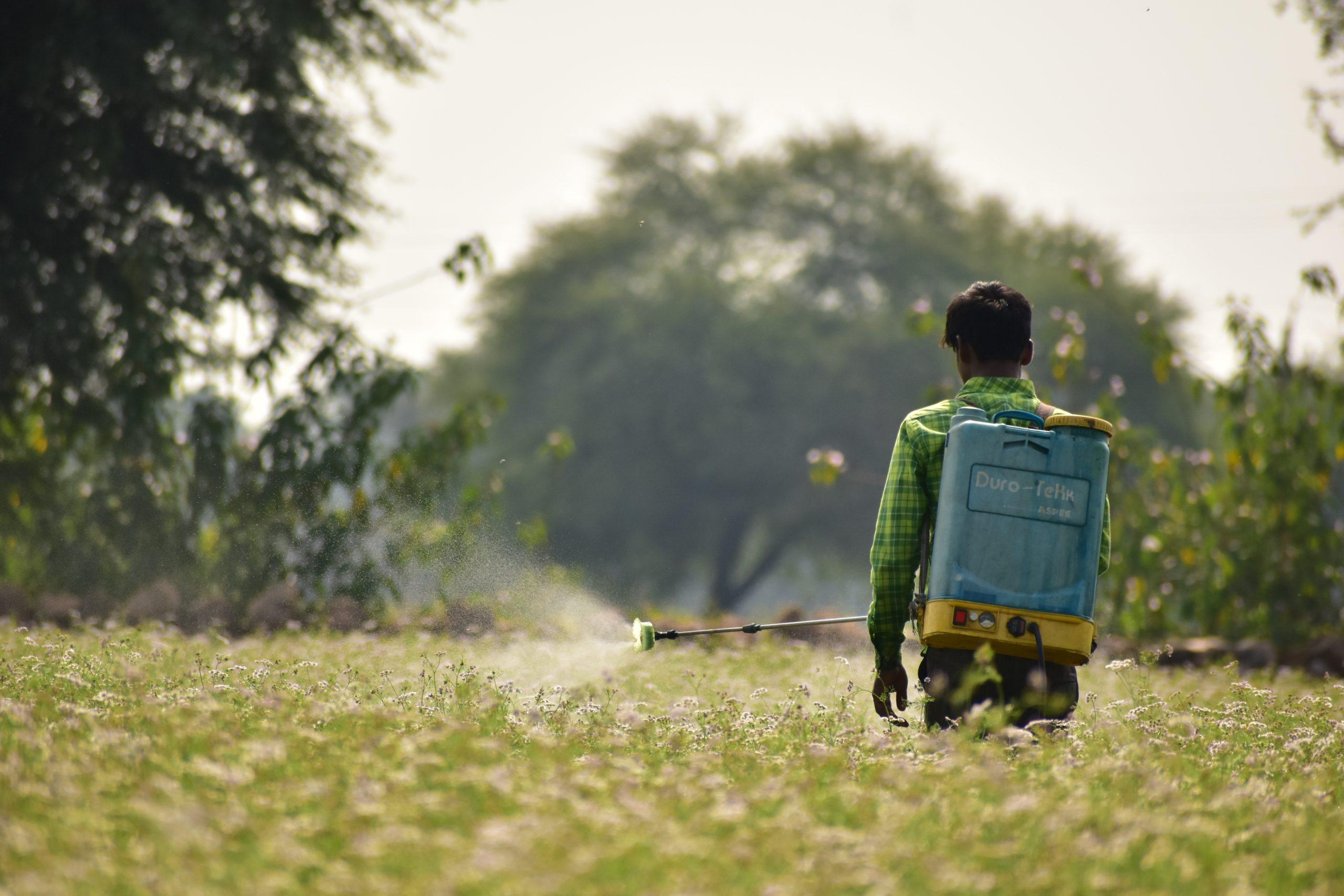 Farmer sparkling pesticide in the farm
