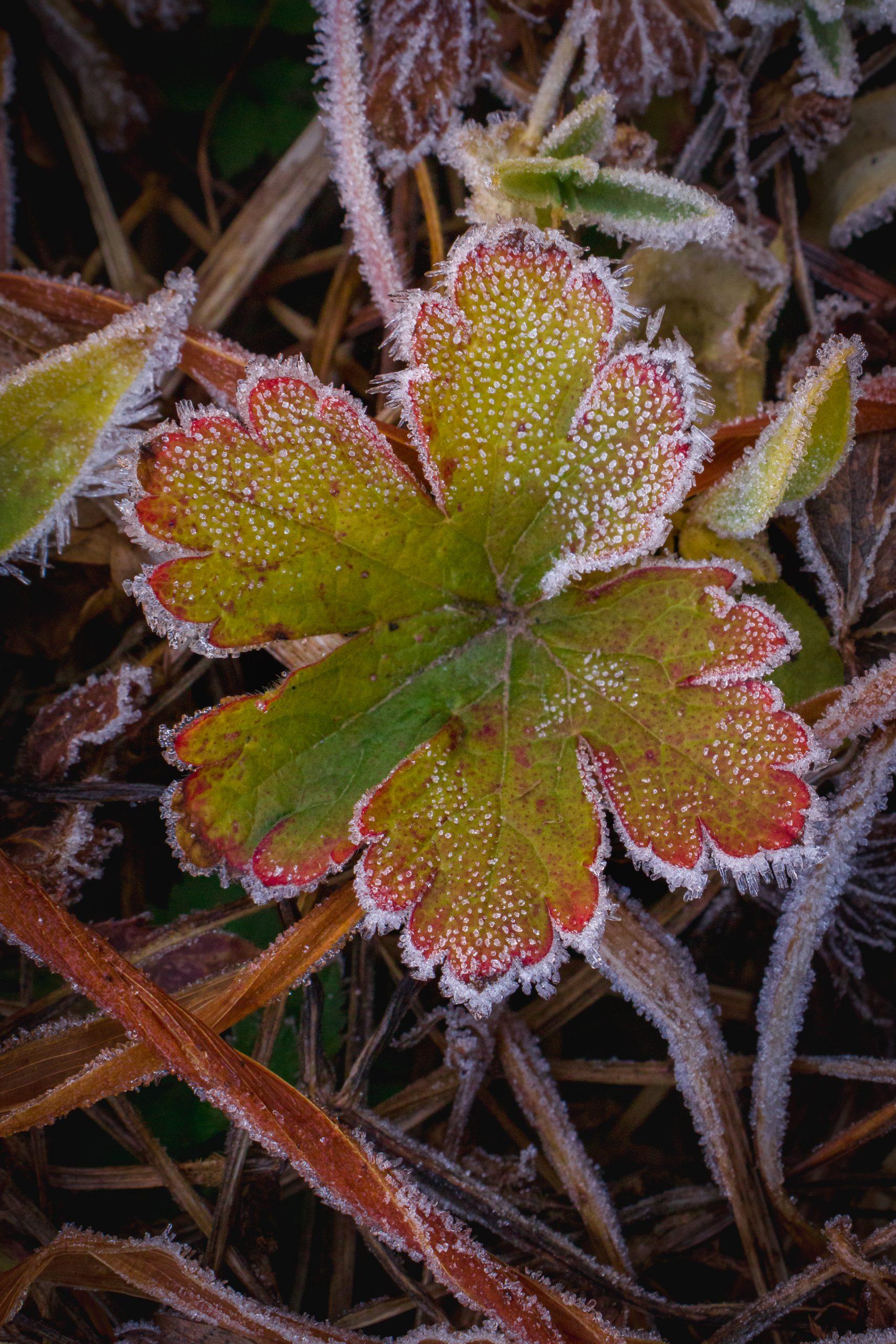 Frozen wild flower
