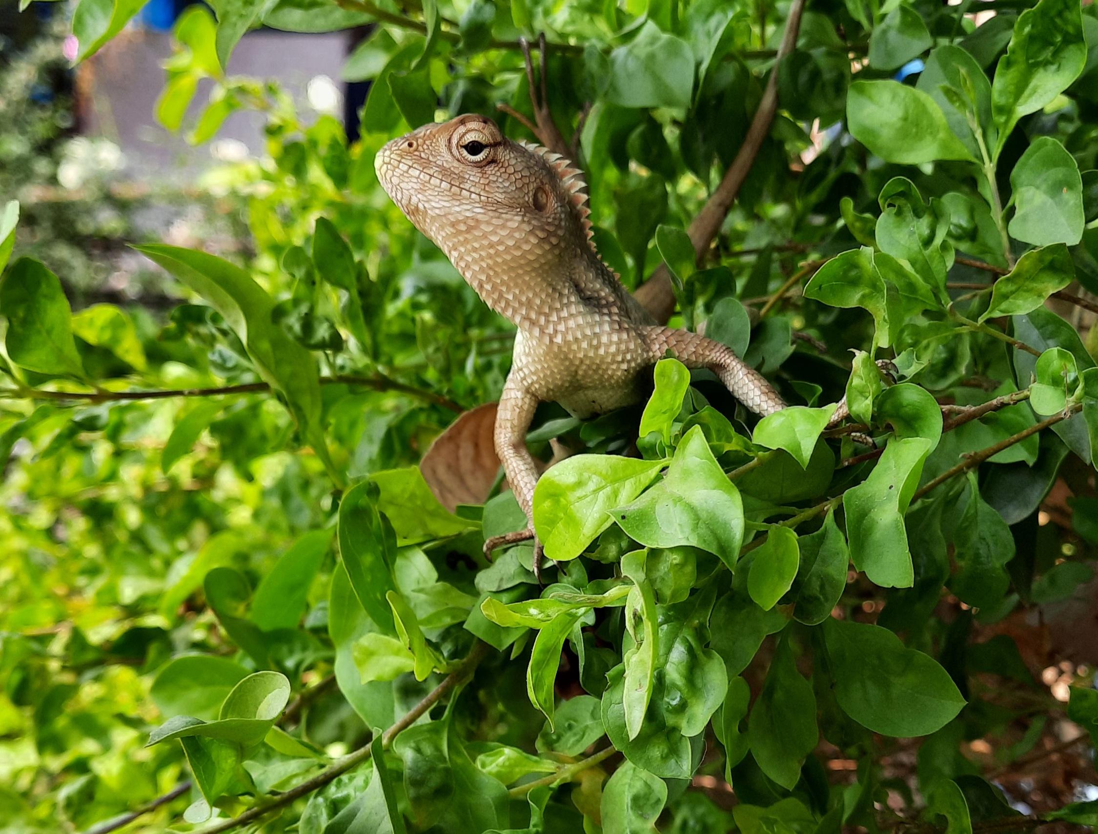 Garden lizard on plant