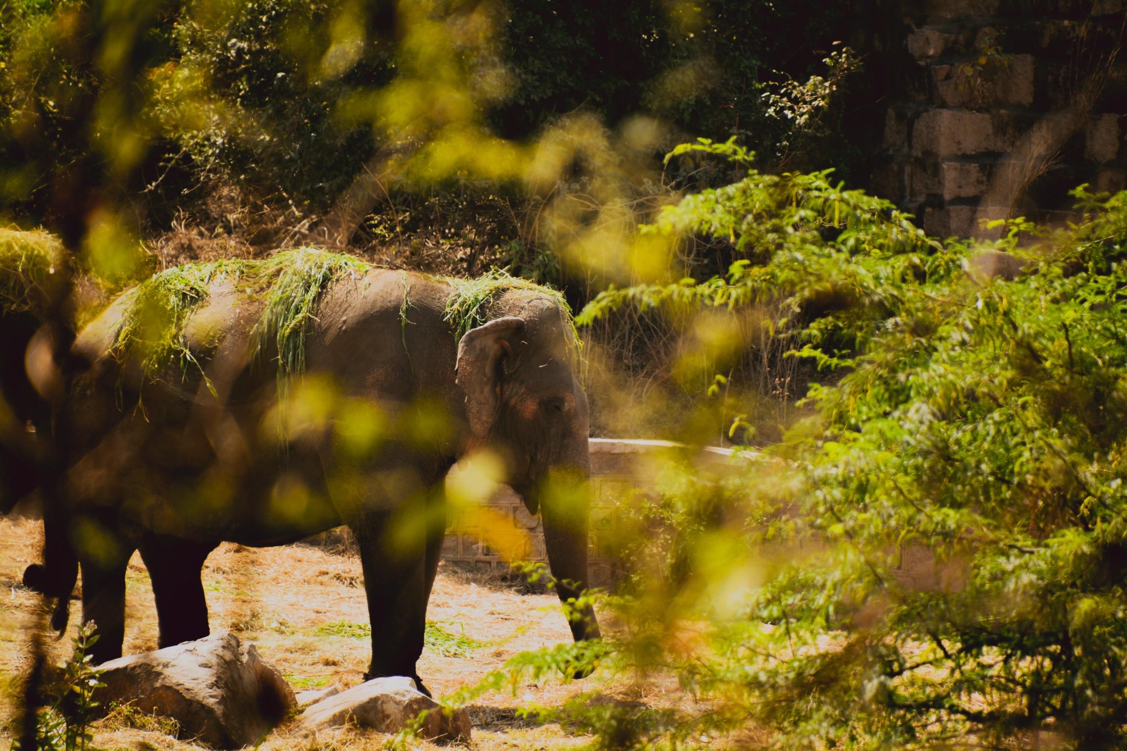 Grass over the Elephant