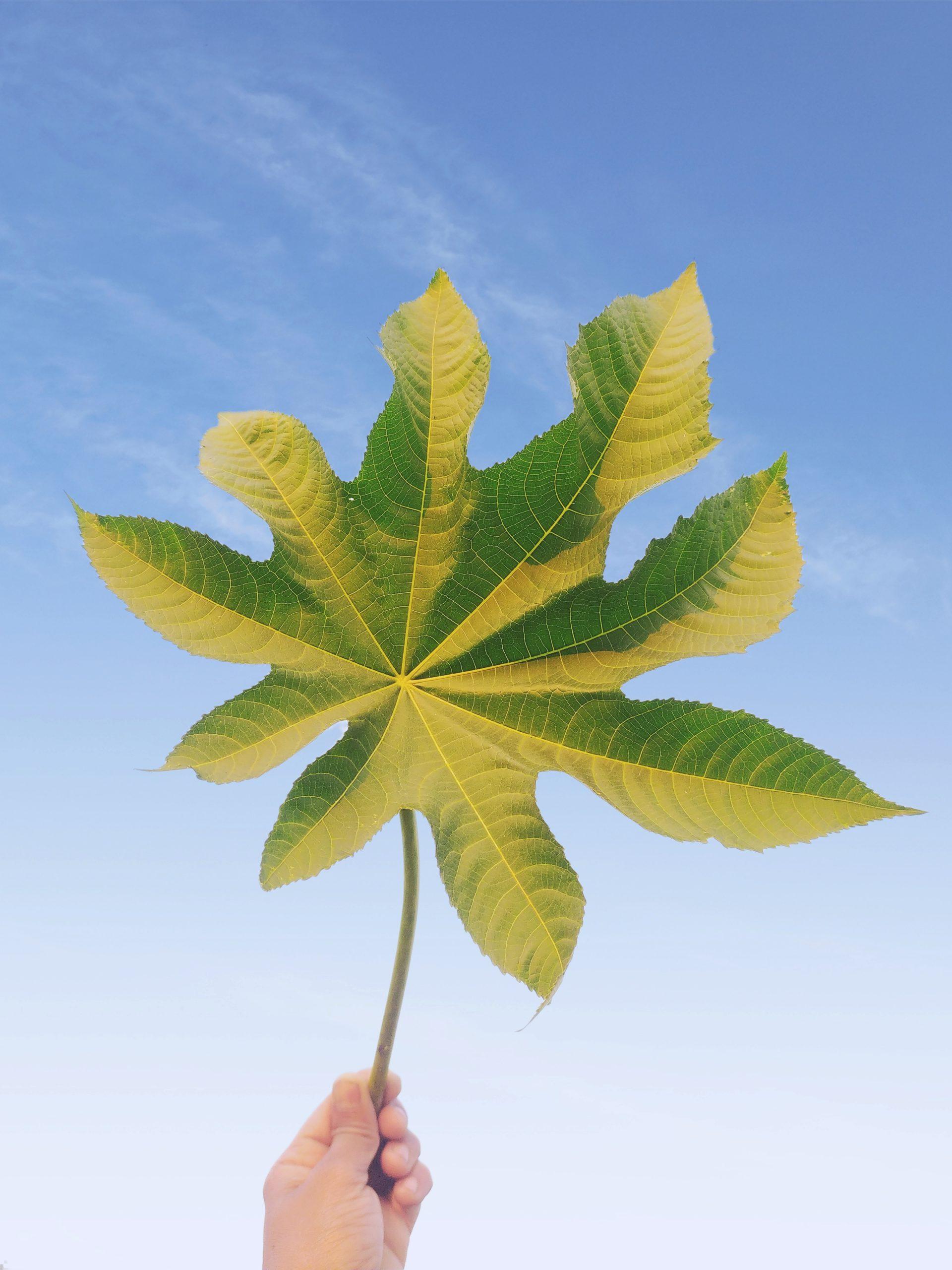 Green leaf in hand