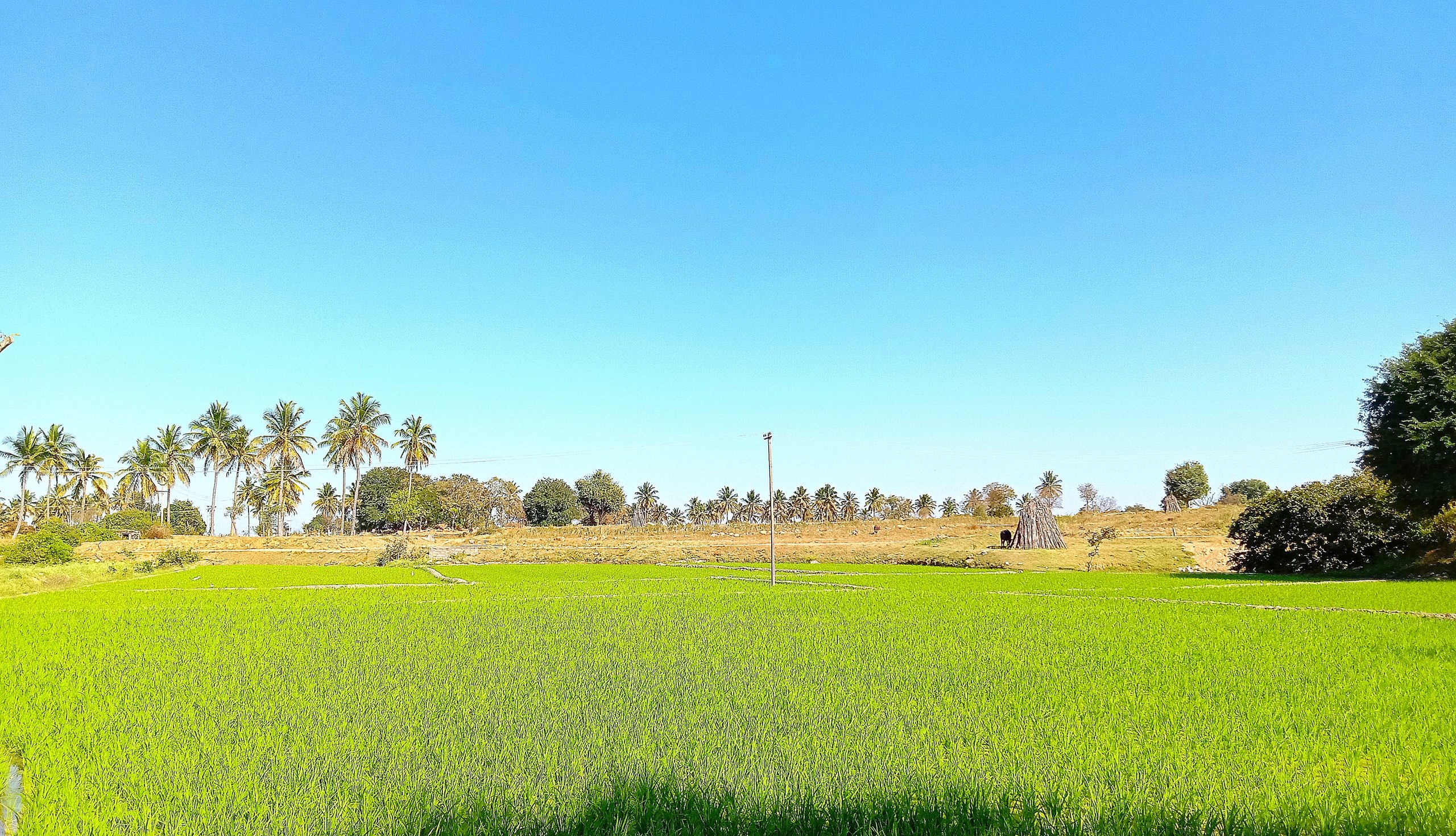 Greenery of agriculture land