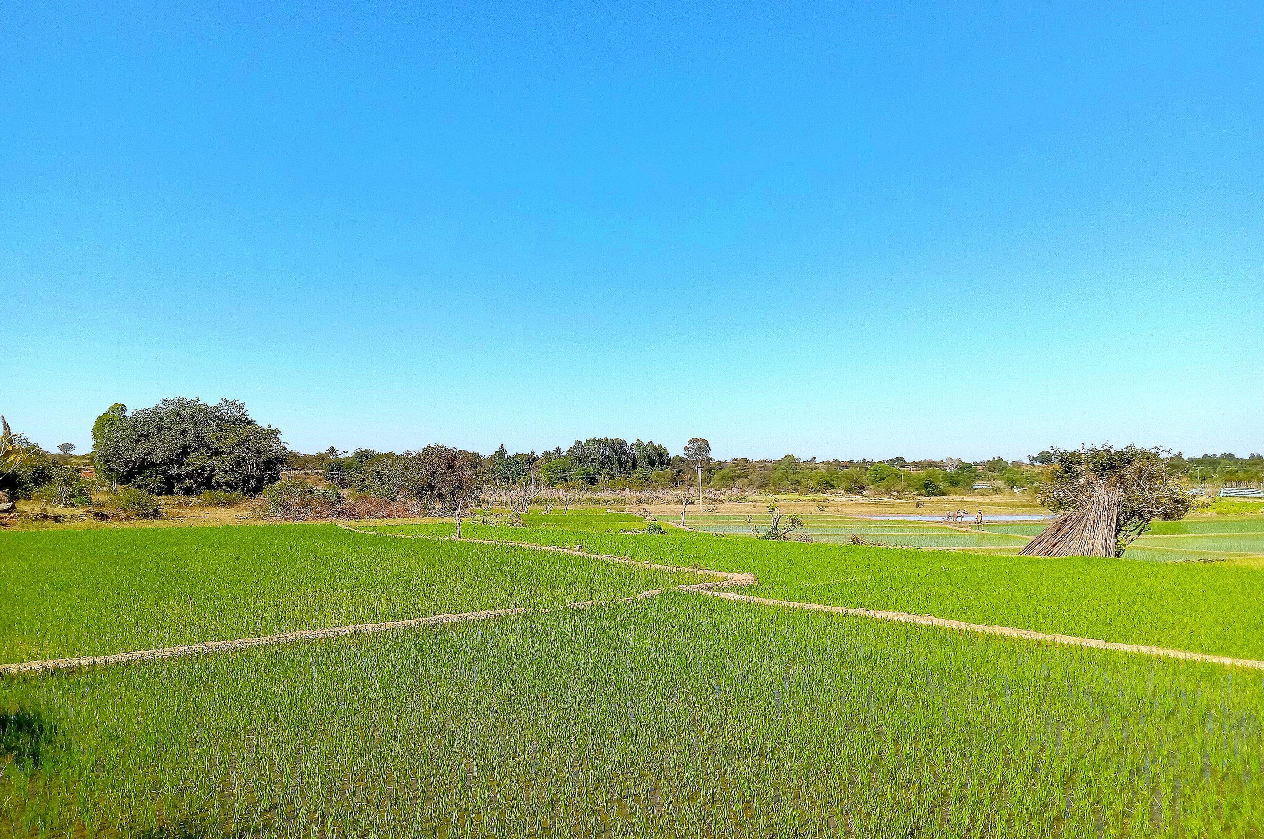 Greenery of fields