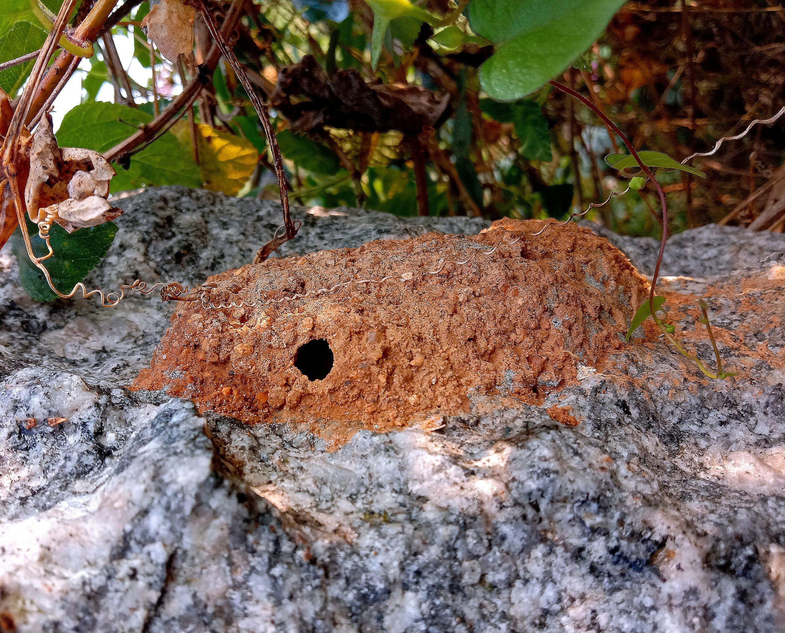 Ground nest of an insect