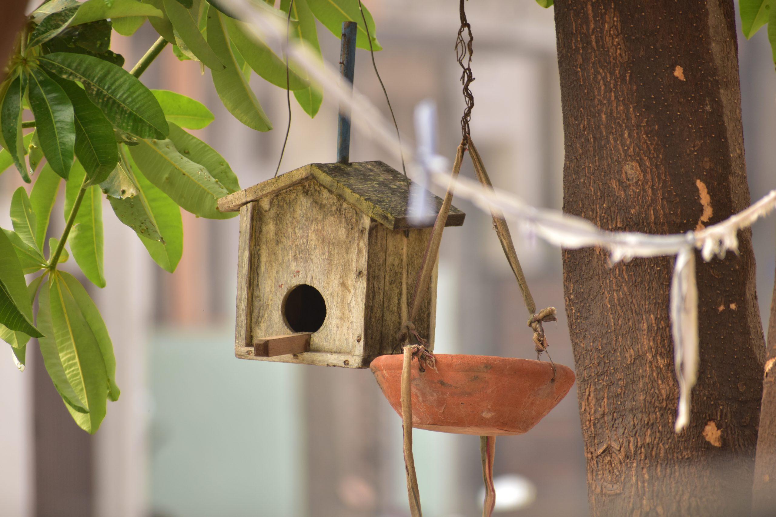 House for bird