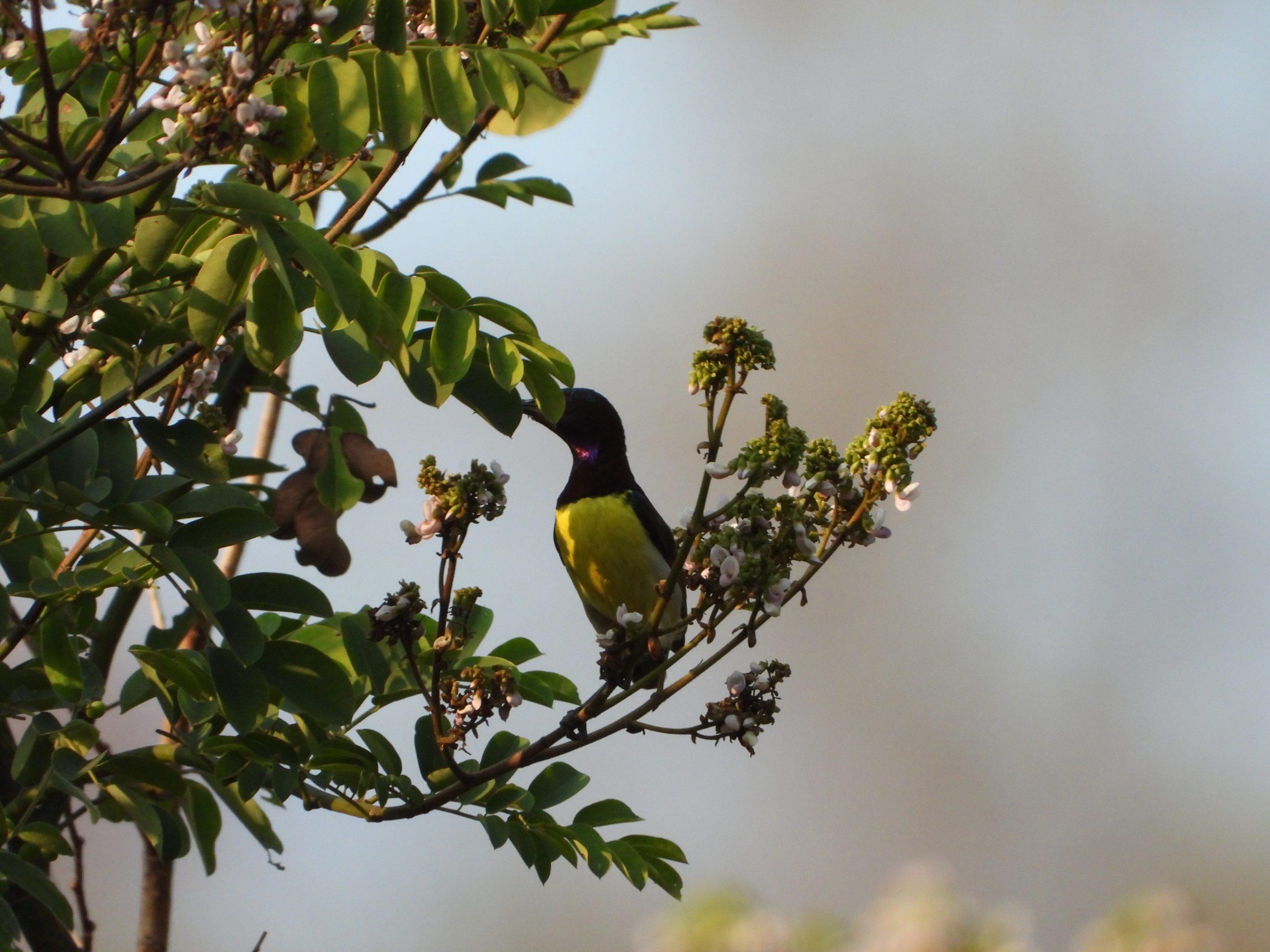 Humming bird on the tree