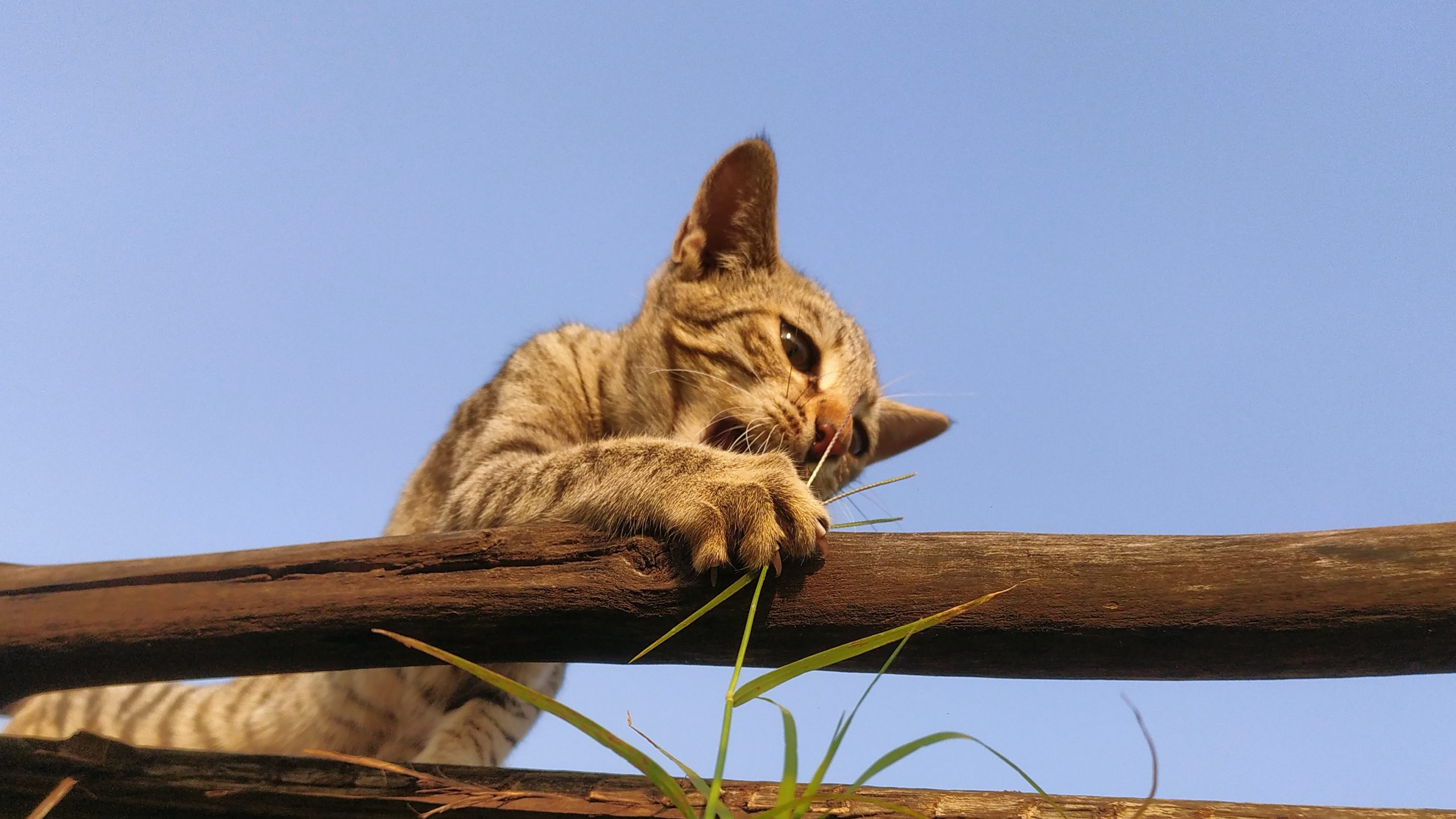 Little kitten on wood log