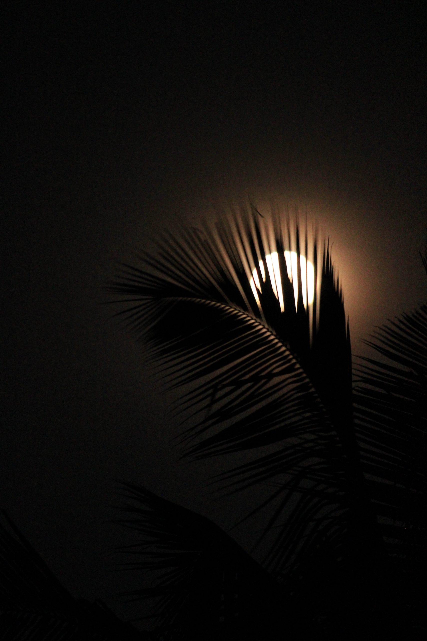 Moon view through the tree