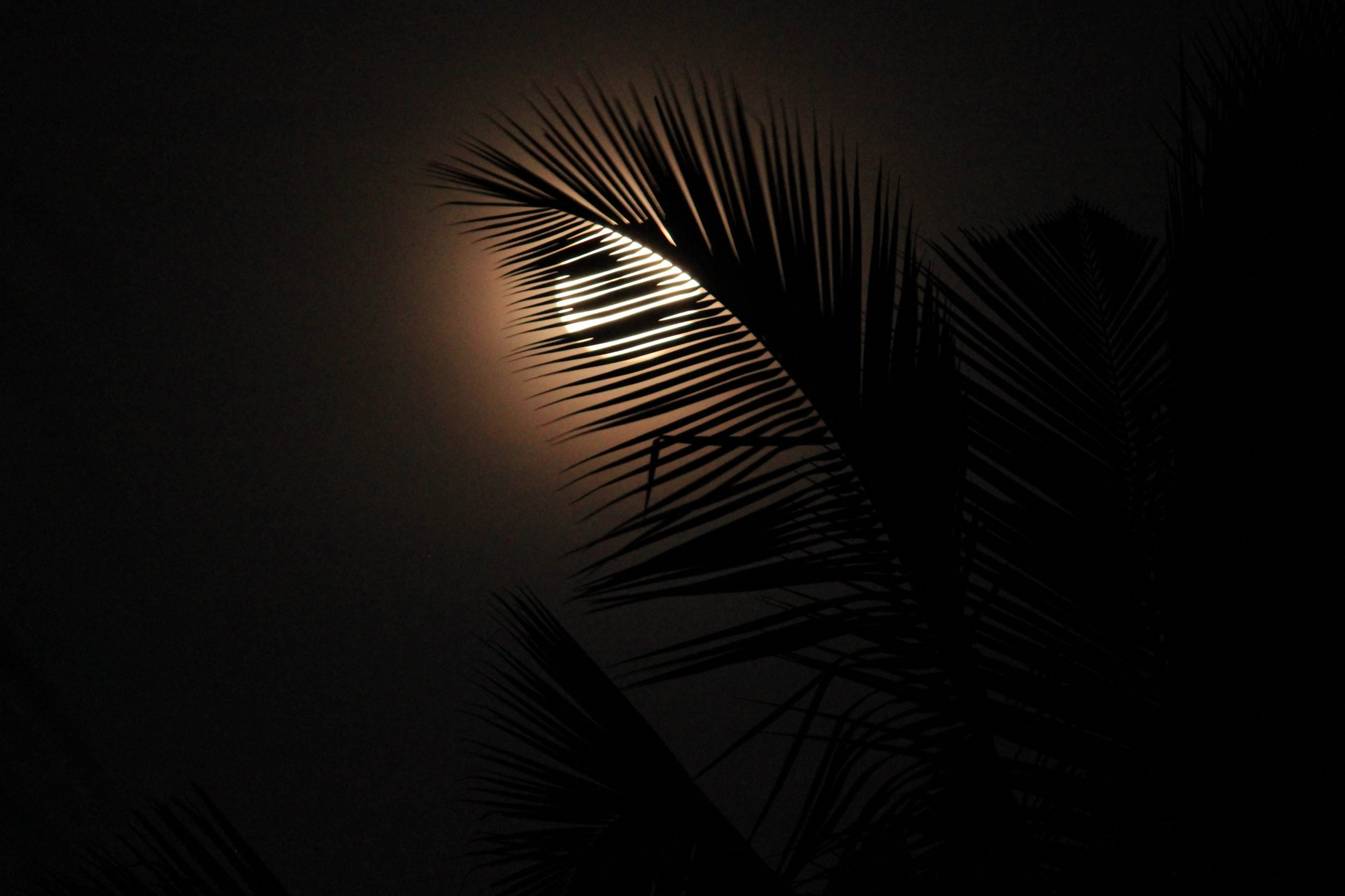 Moon through the tree leaves