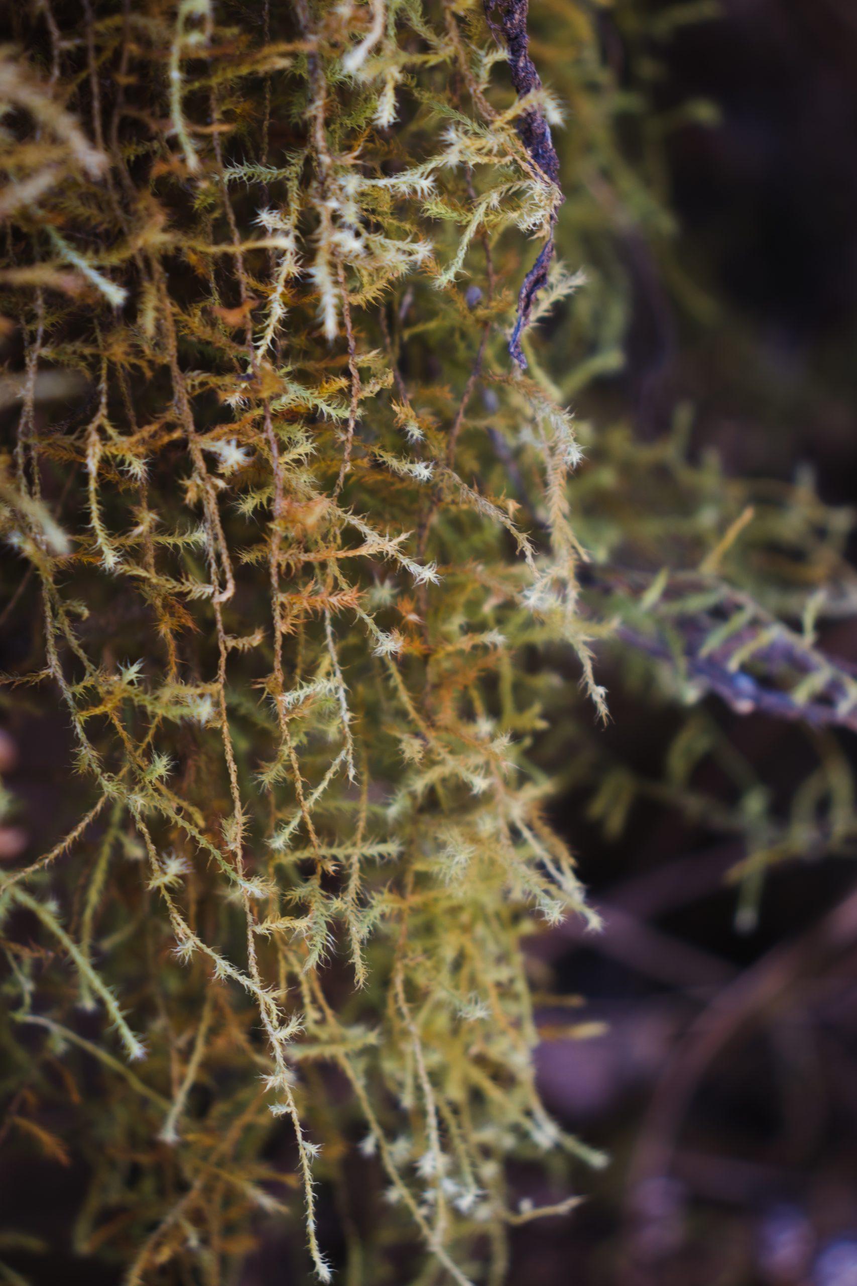 Green moss plant