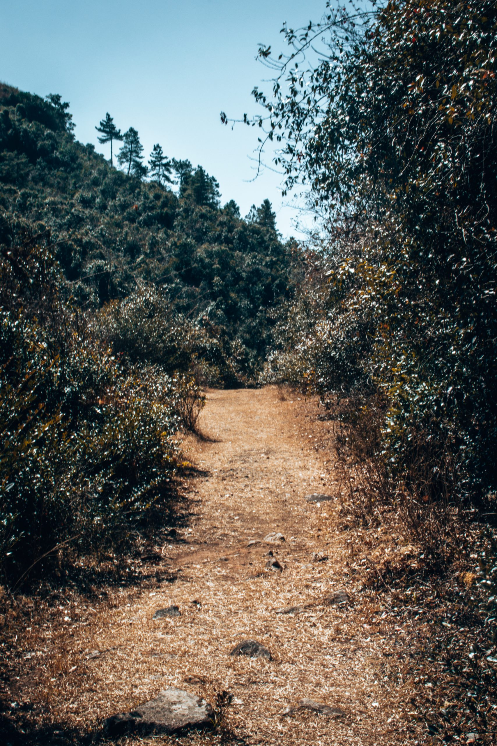 Narrow path in the forest