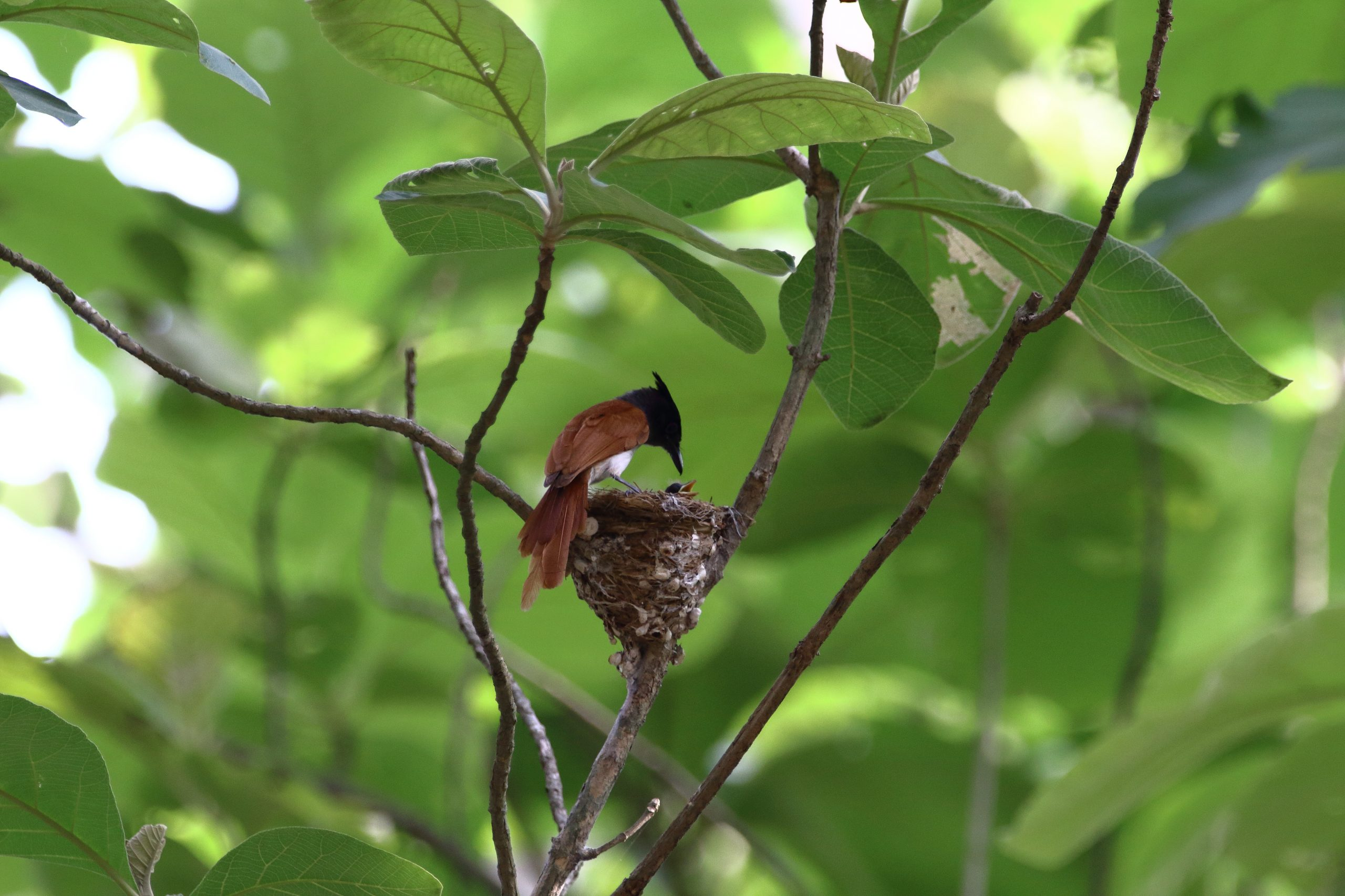 Nest of a bird on a branch
