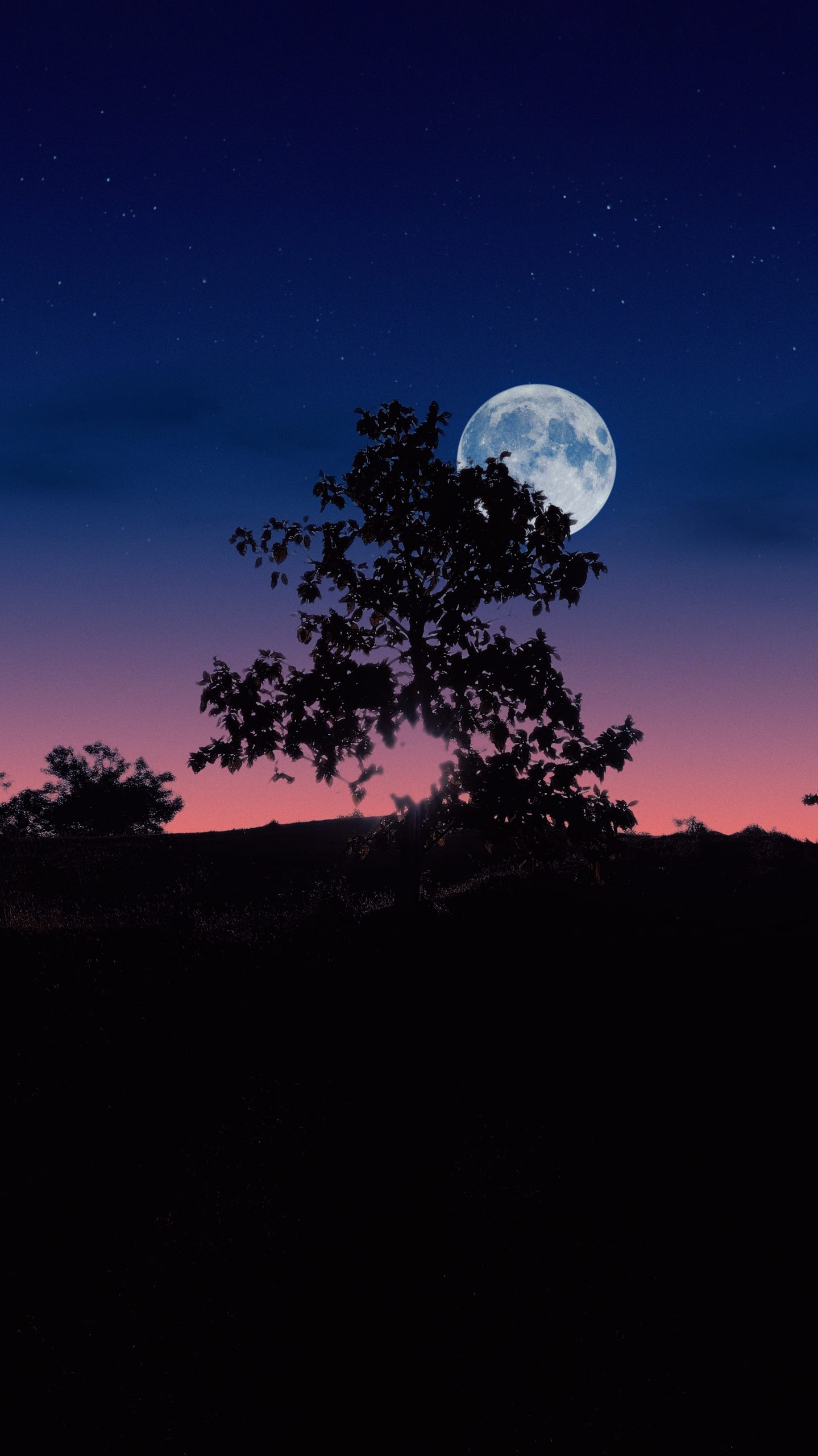 Night view of tree
