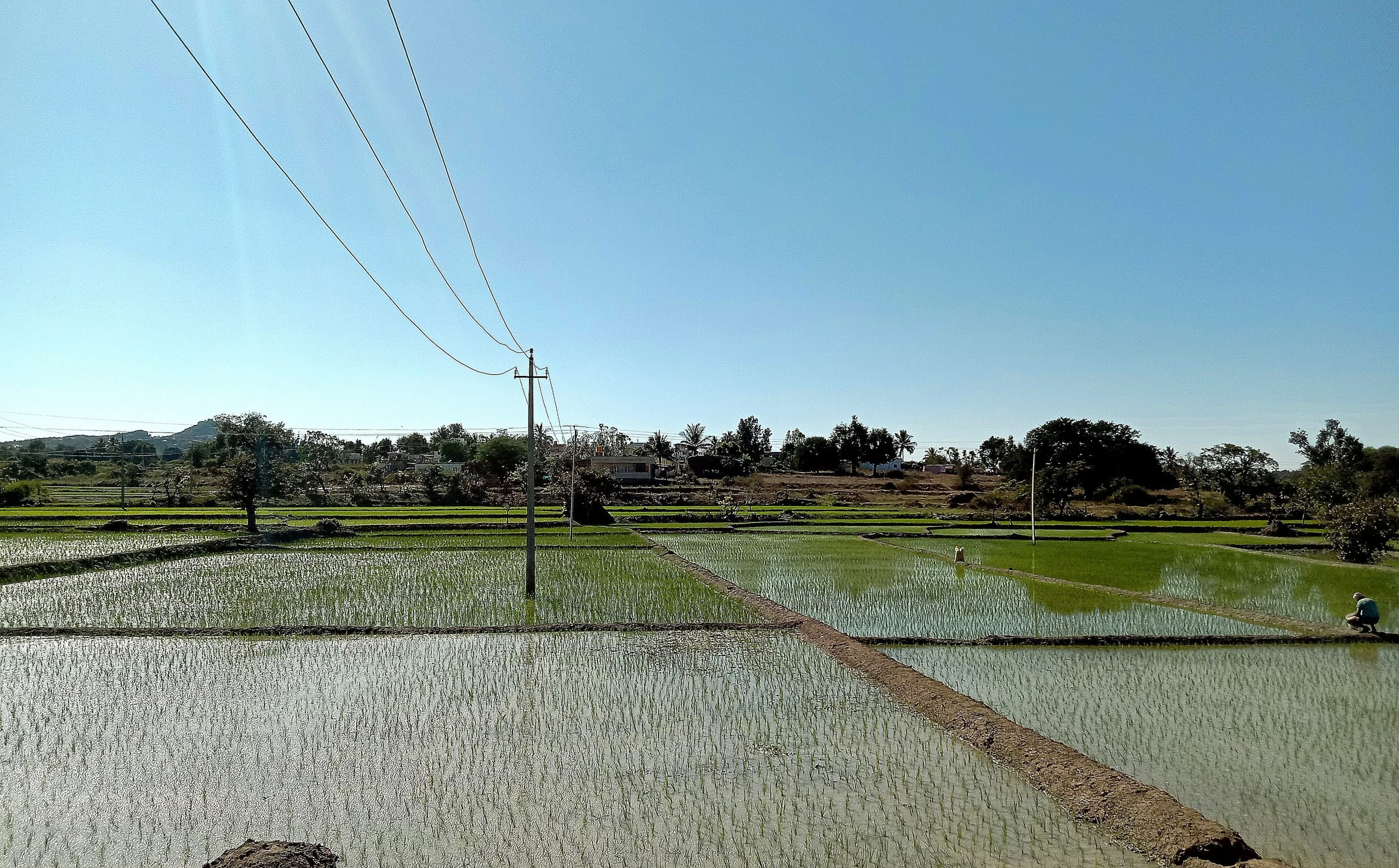 Paddy fields filled with water