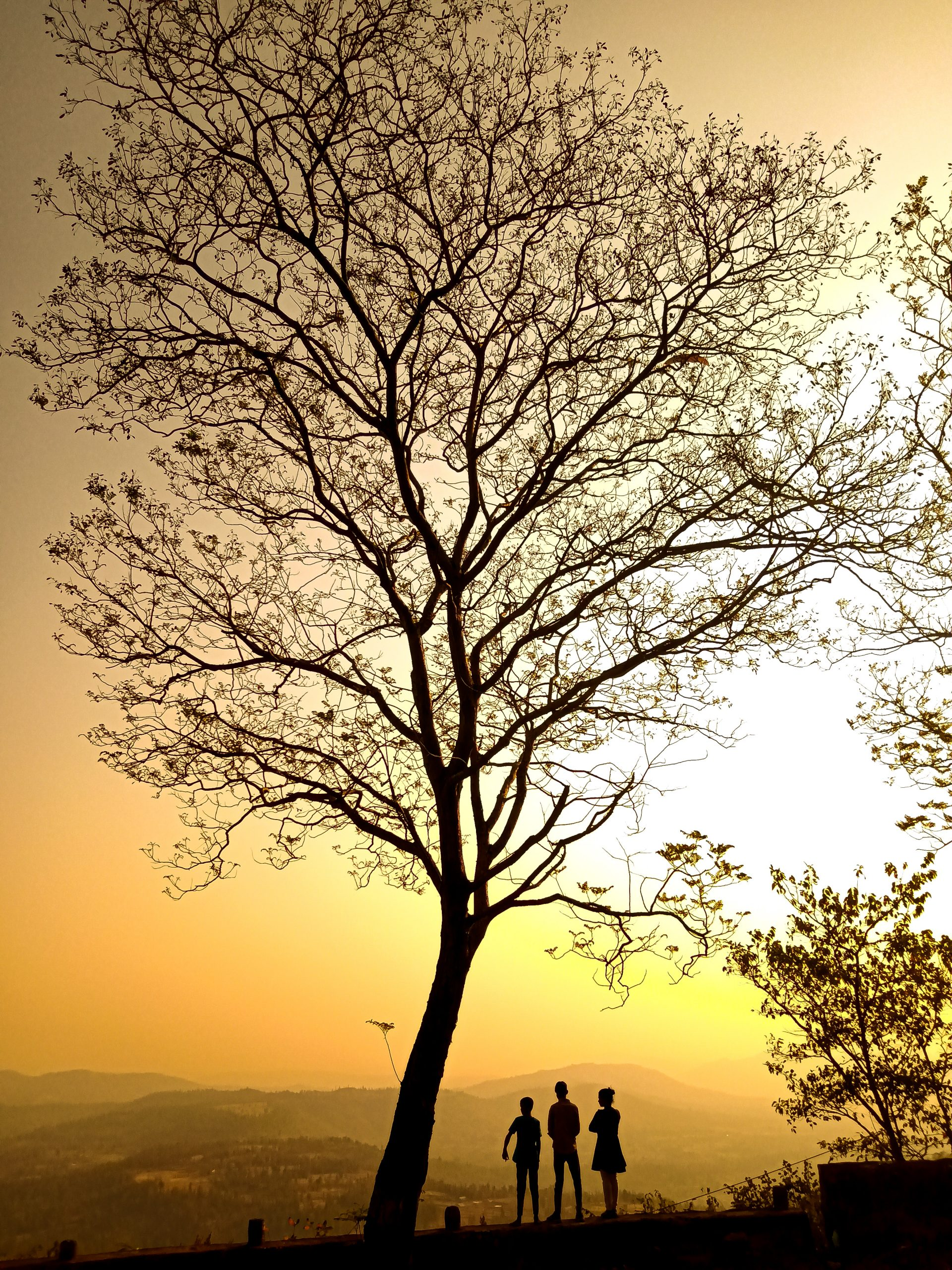 People under the dry tree during sunset