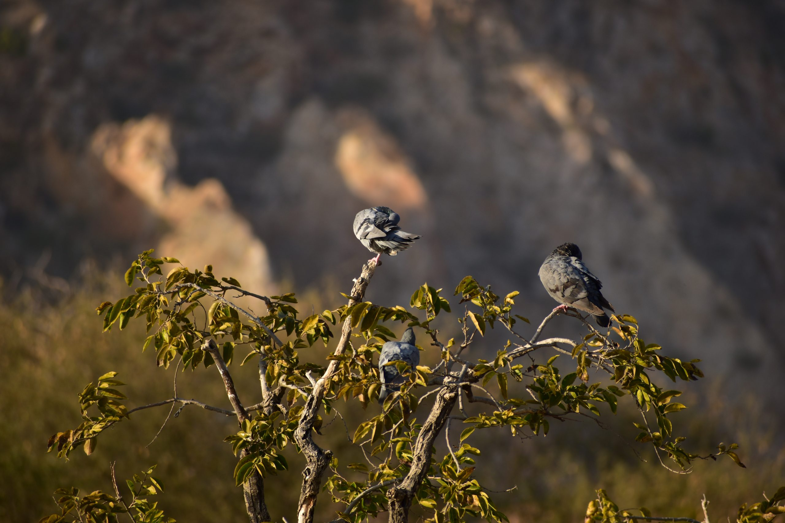 Pigeons on top of a tree
