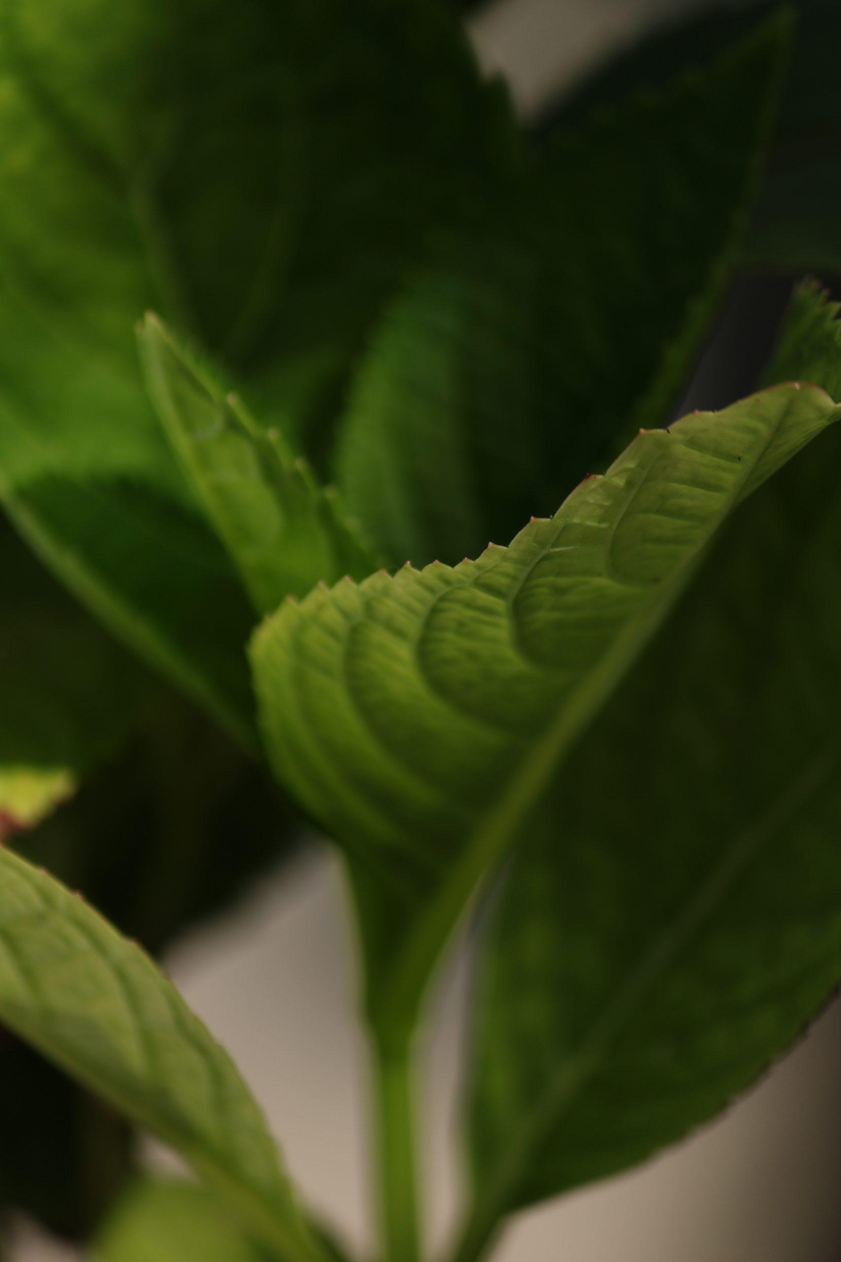 Macro view of Plant leaf