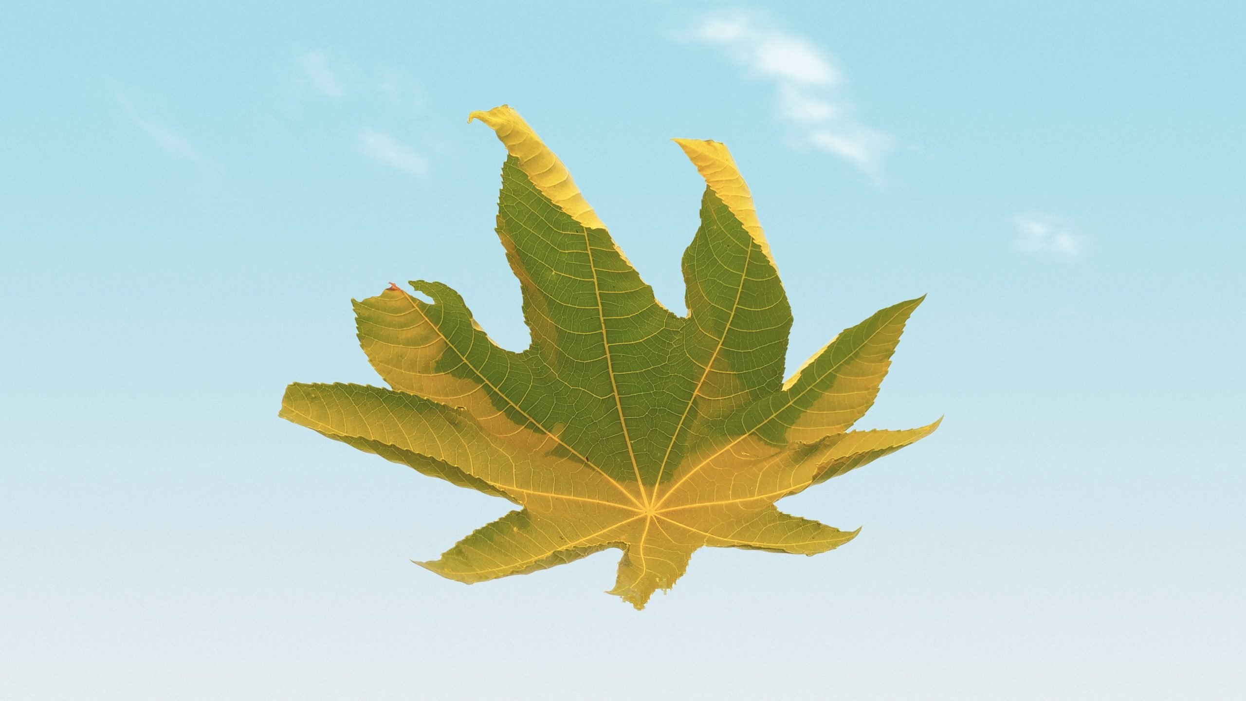 Plant leaf in the air