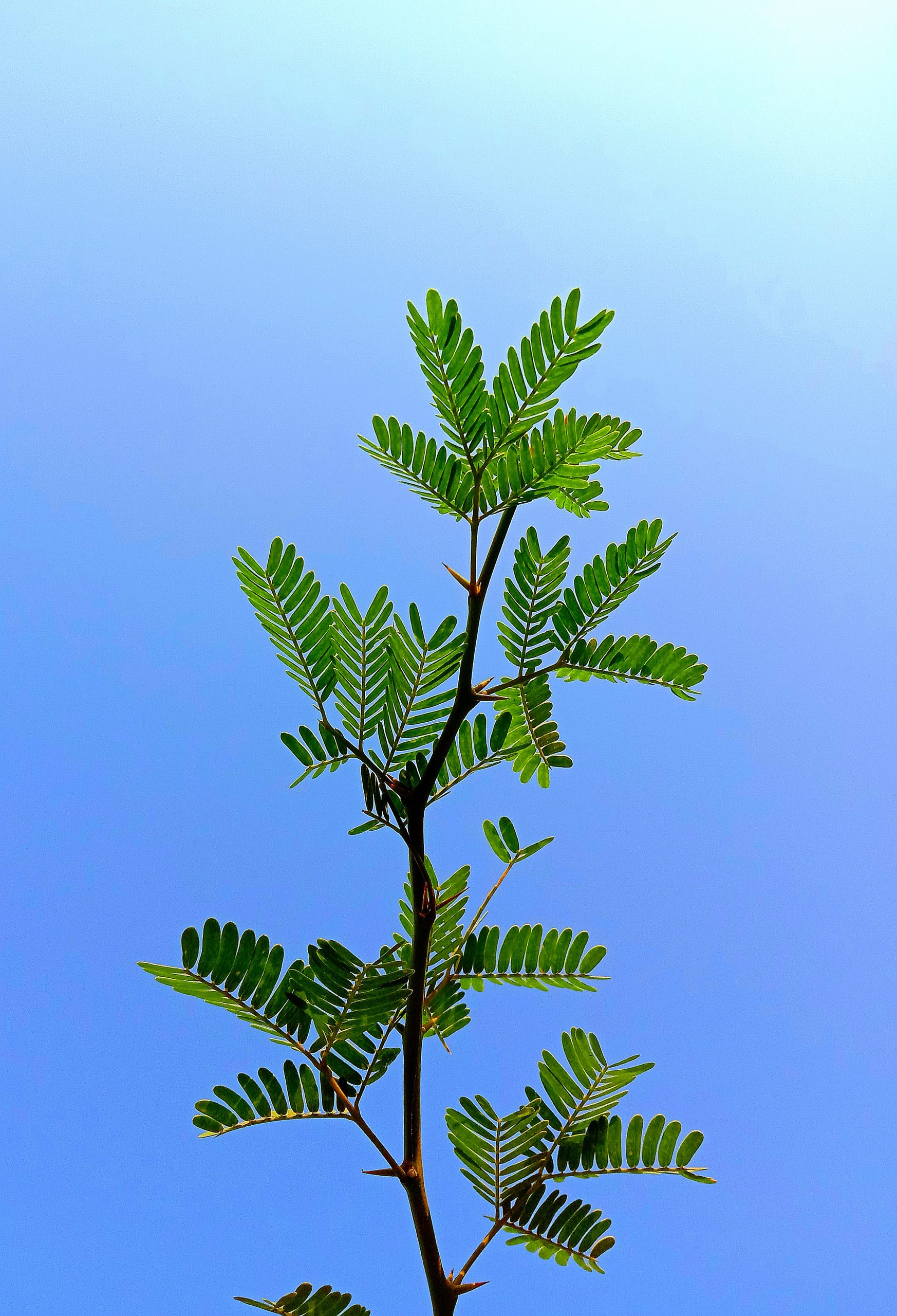 Plant under clear sky