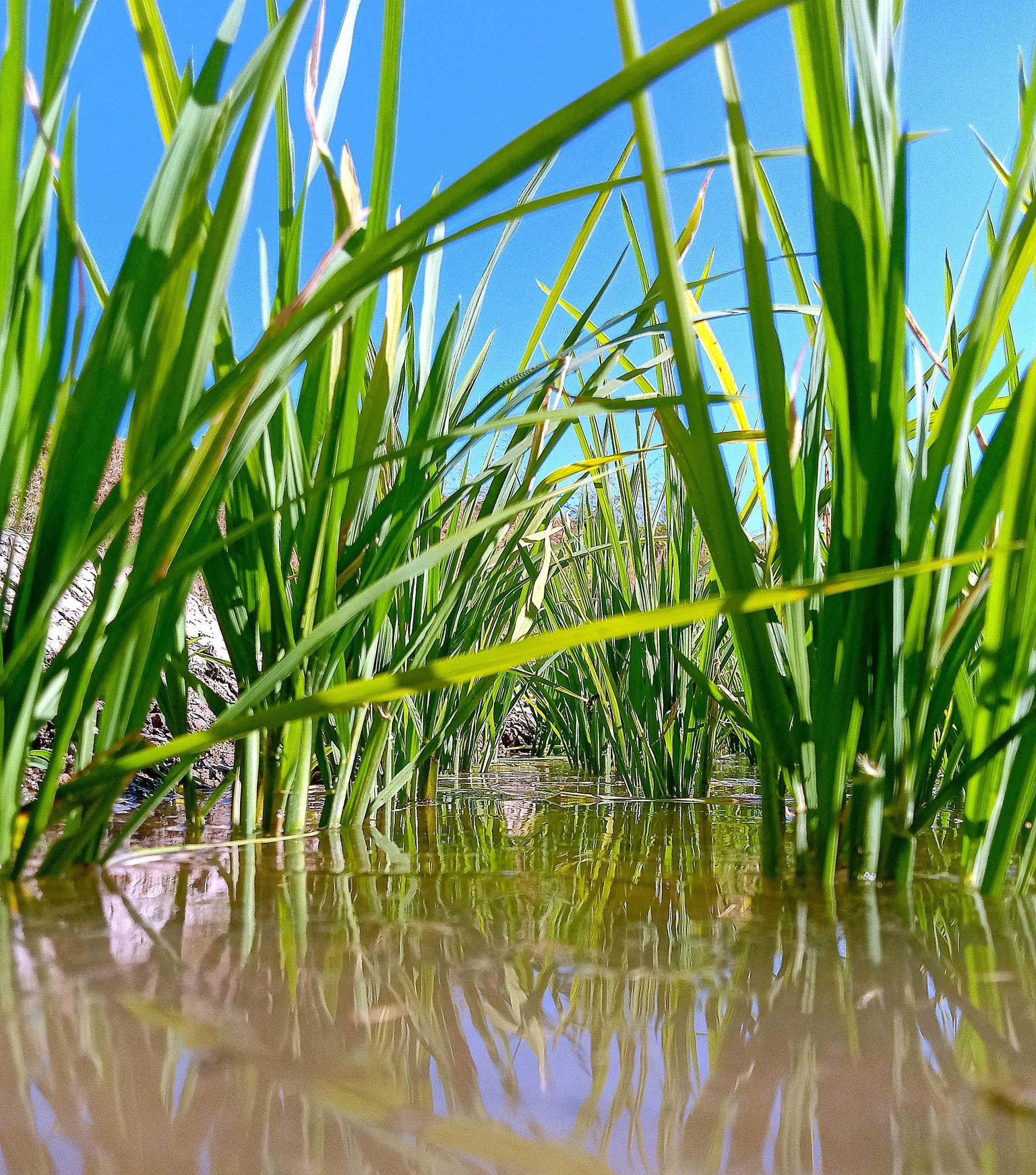 Plants in water
