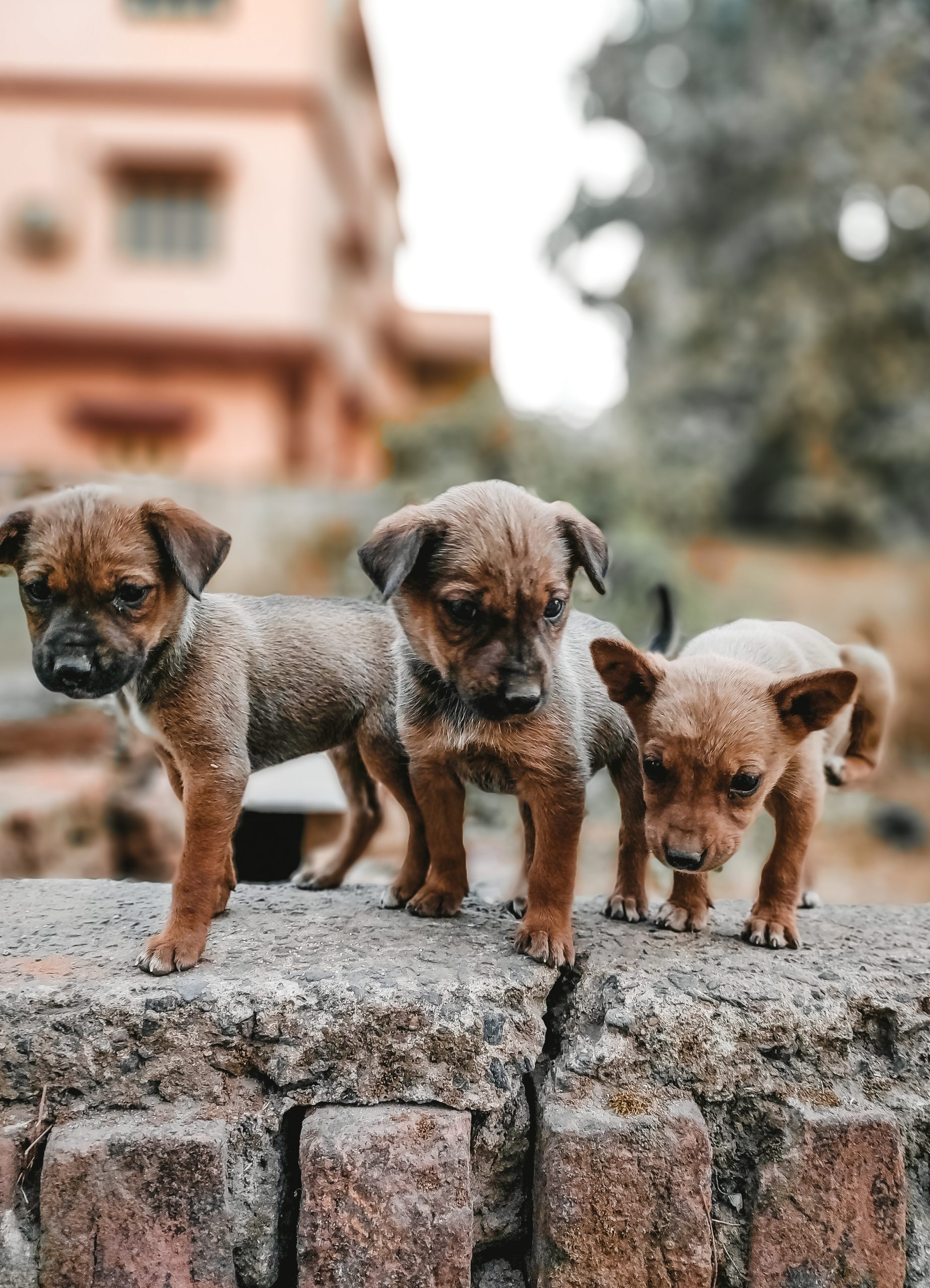 Puppies on wall