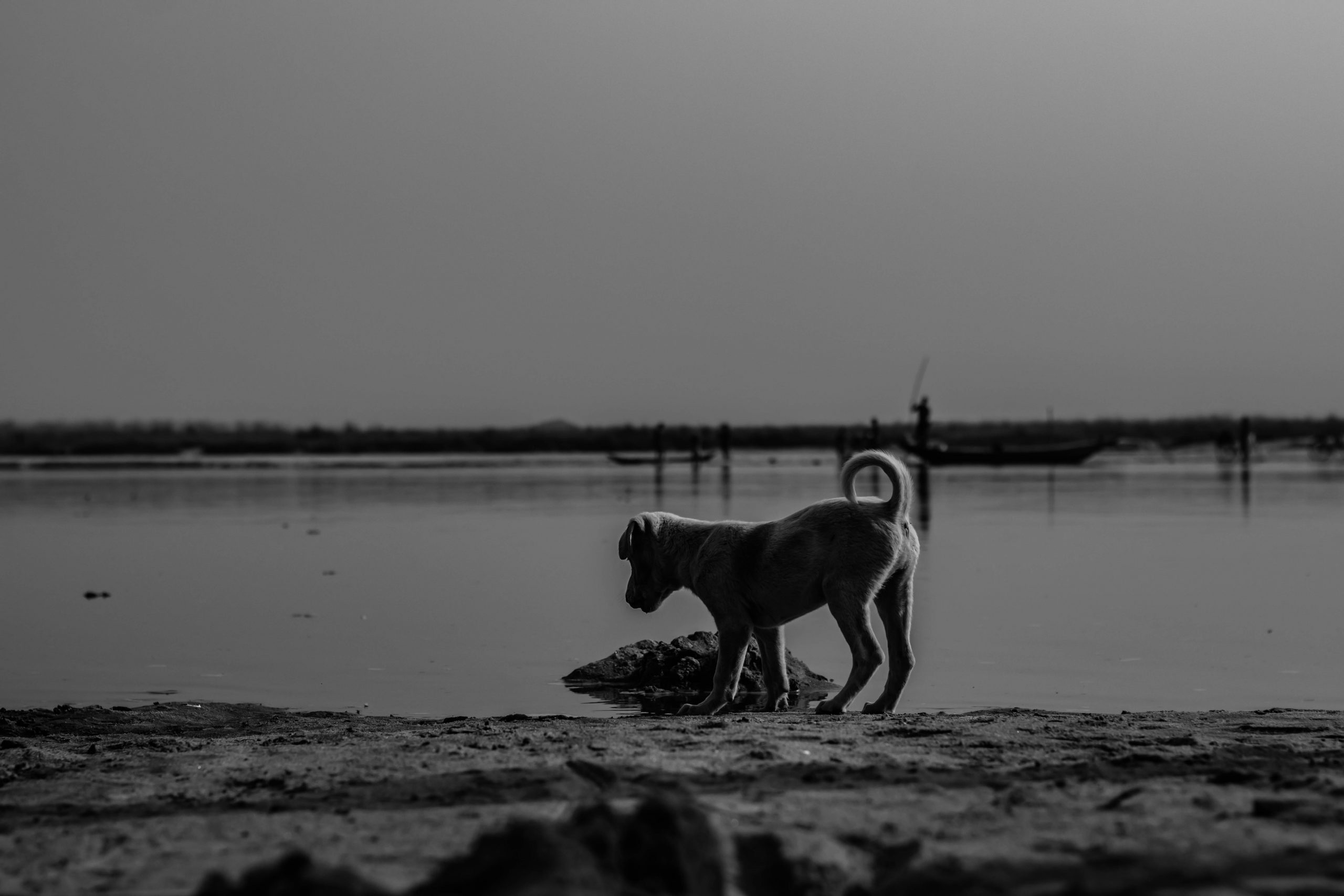 Puppy near the river