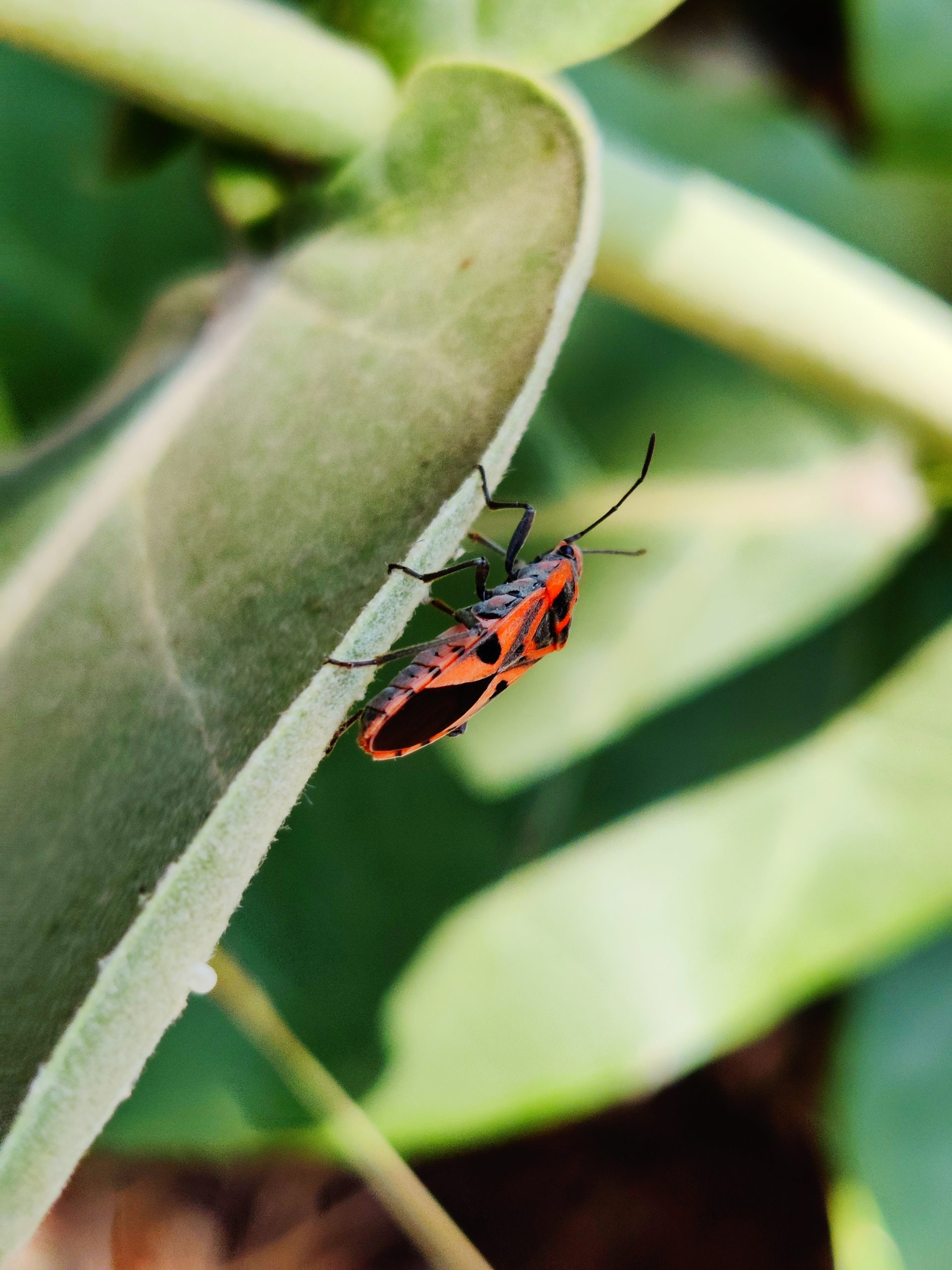 Red bug on plant leaf