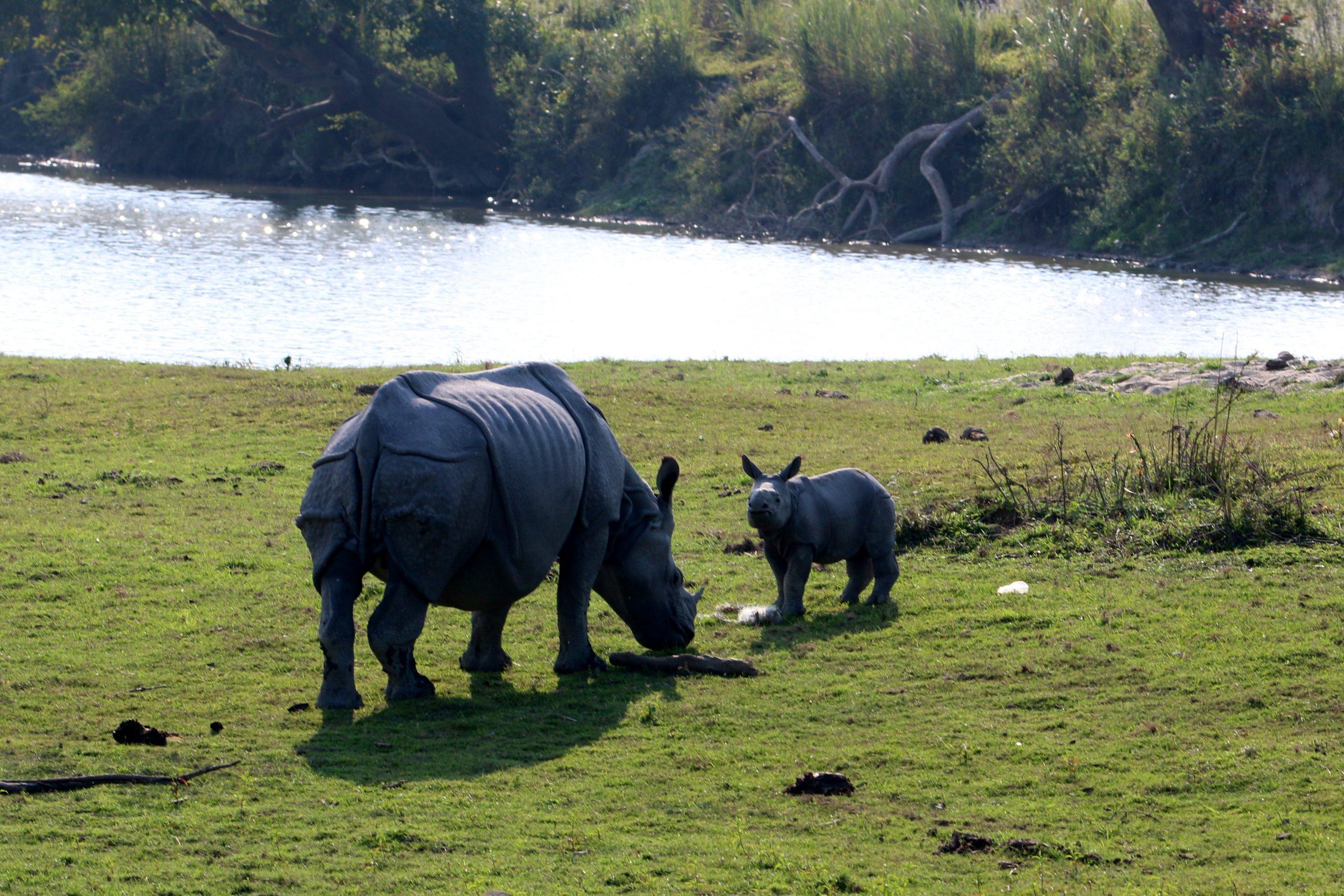 Rhino near the river