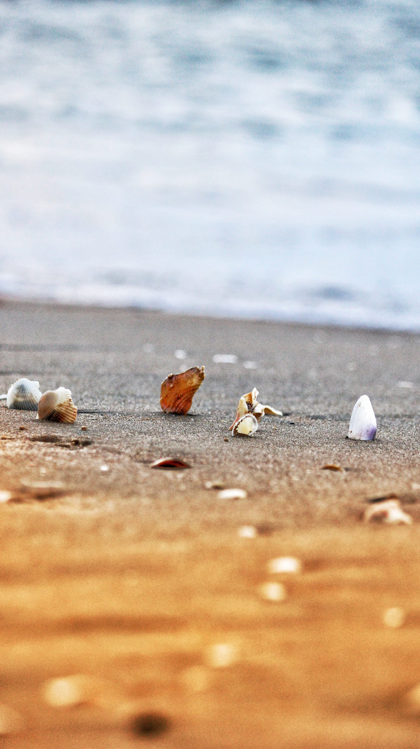 Seashell near the beach