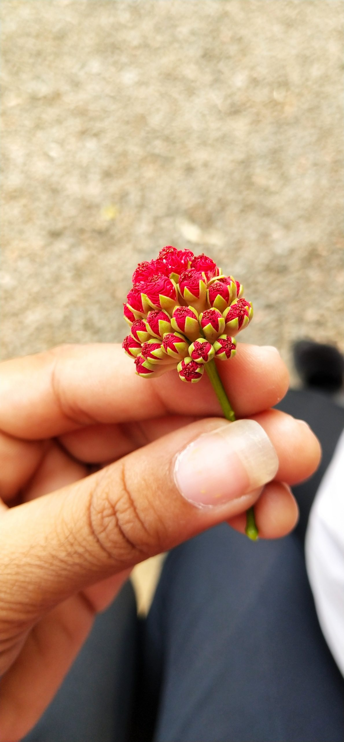 Small flower in hand