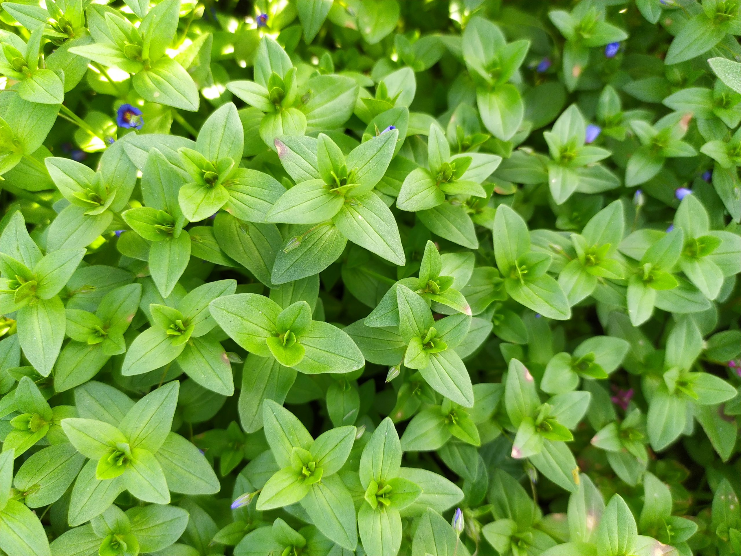 Small multiple plants