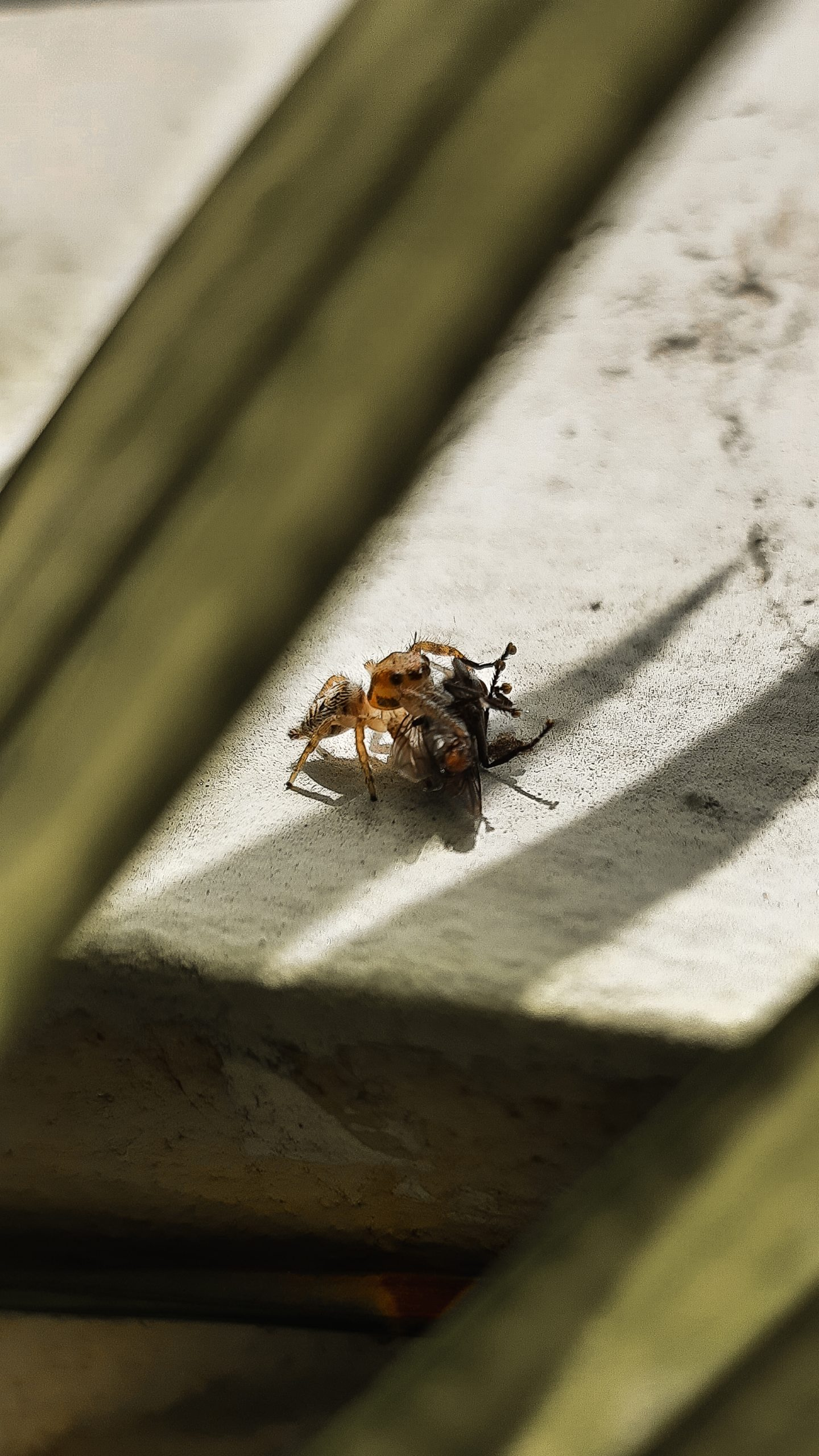 Spider and housefly