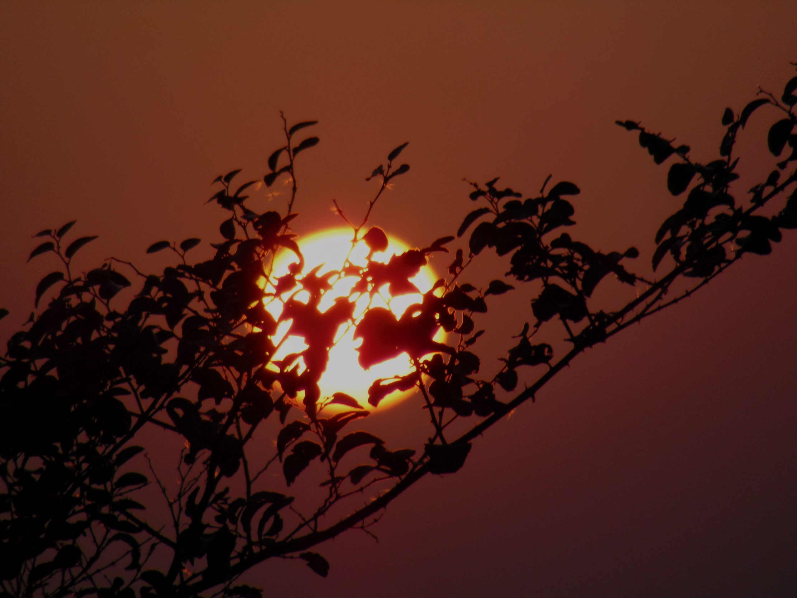 Sun behind a tree branch