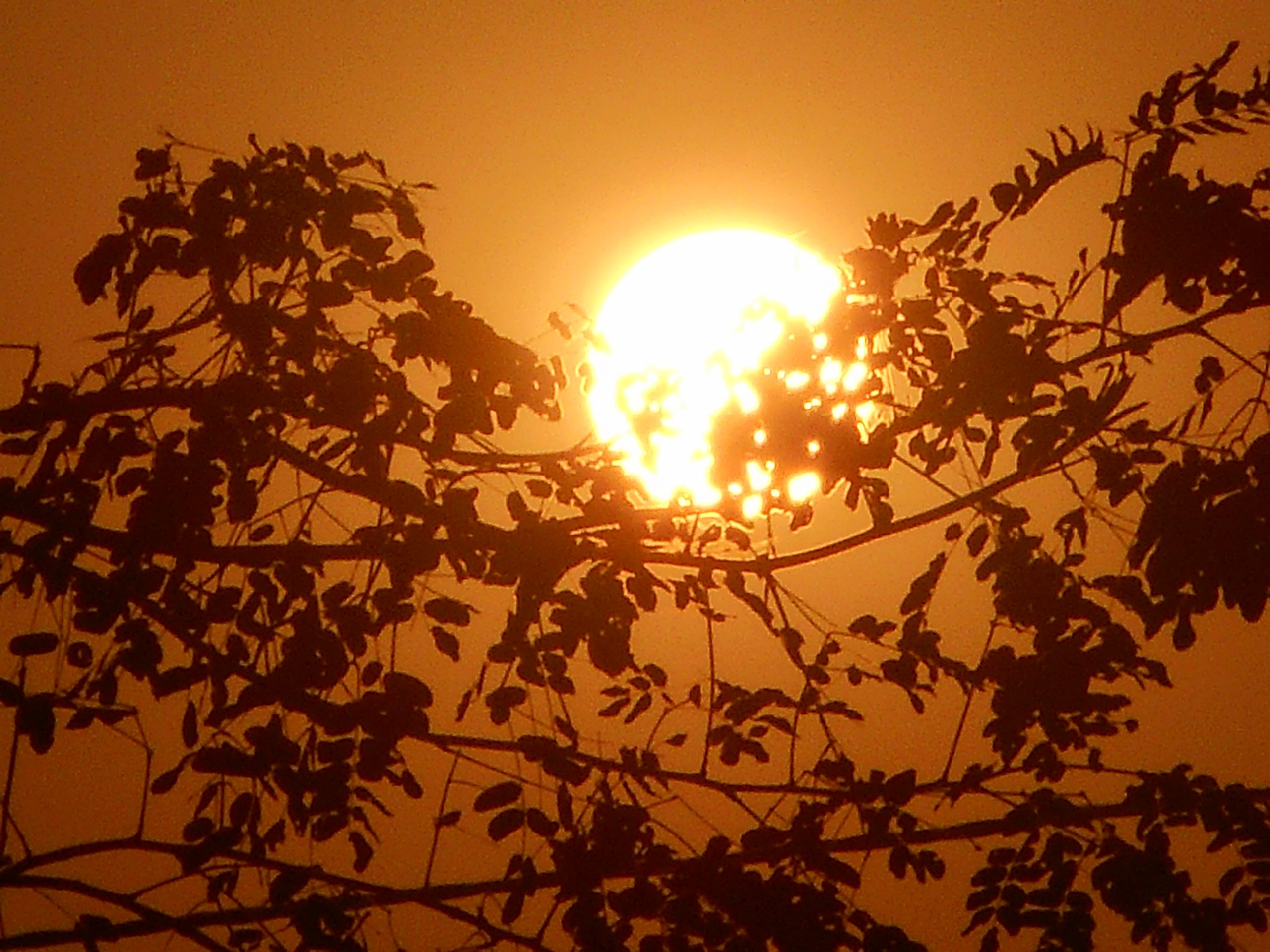 Sun behind branches