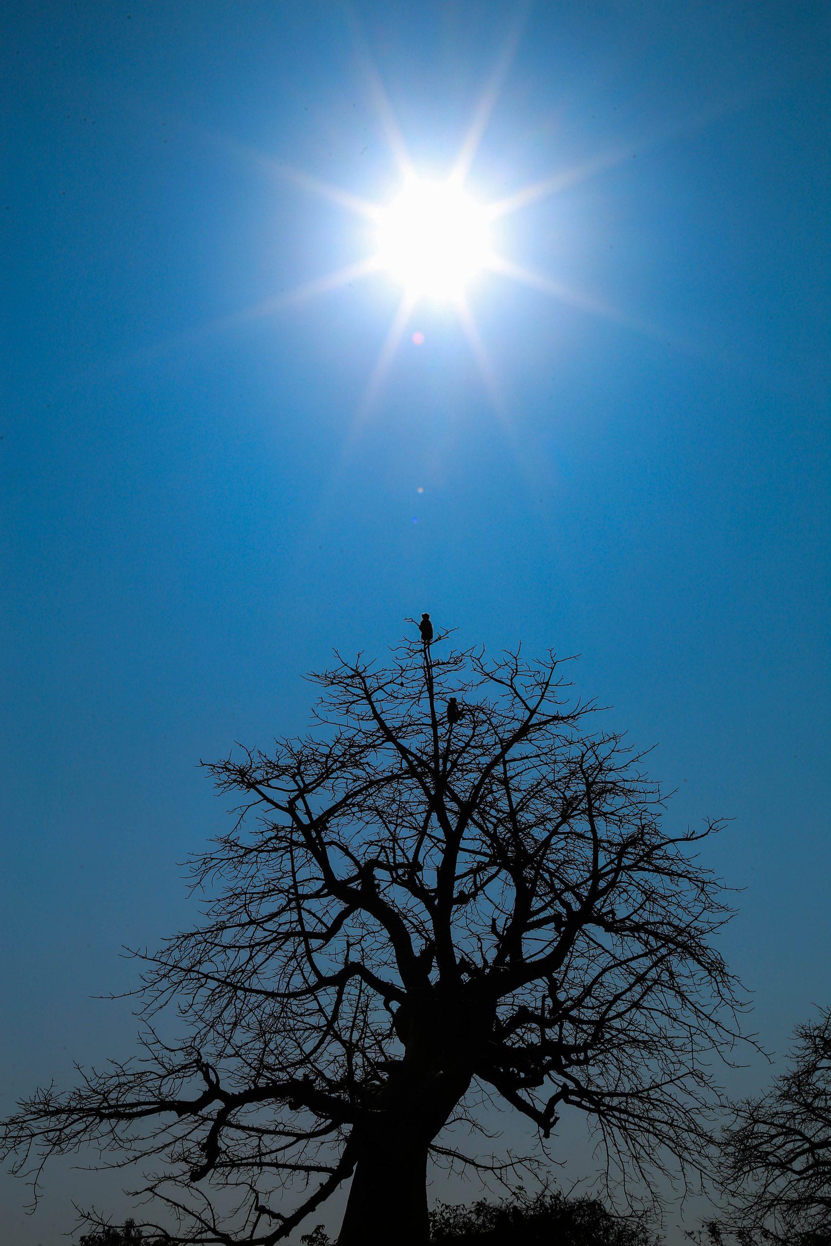 Sun shining over the tree