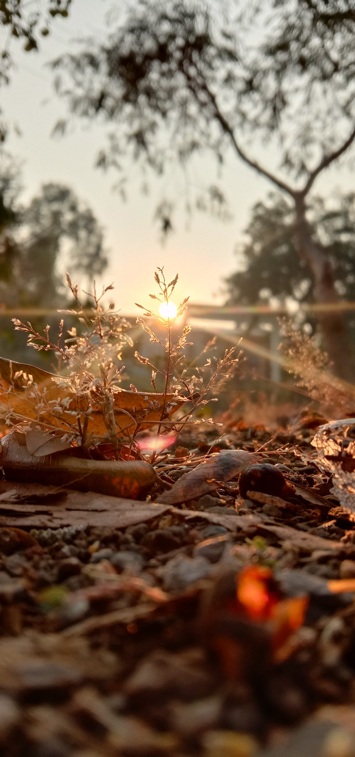 Sunrise in a jungle