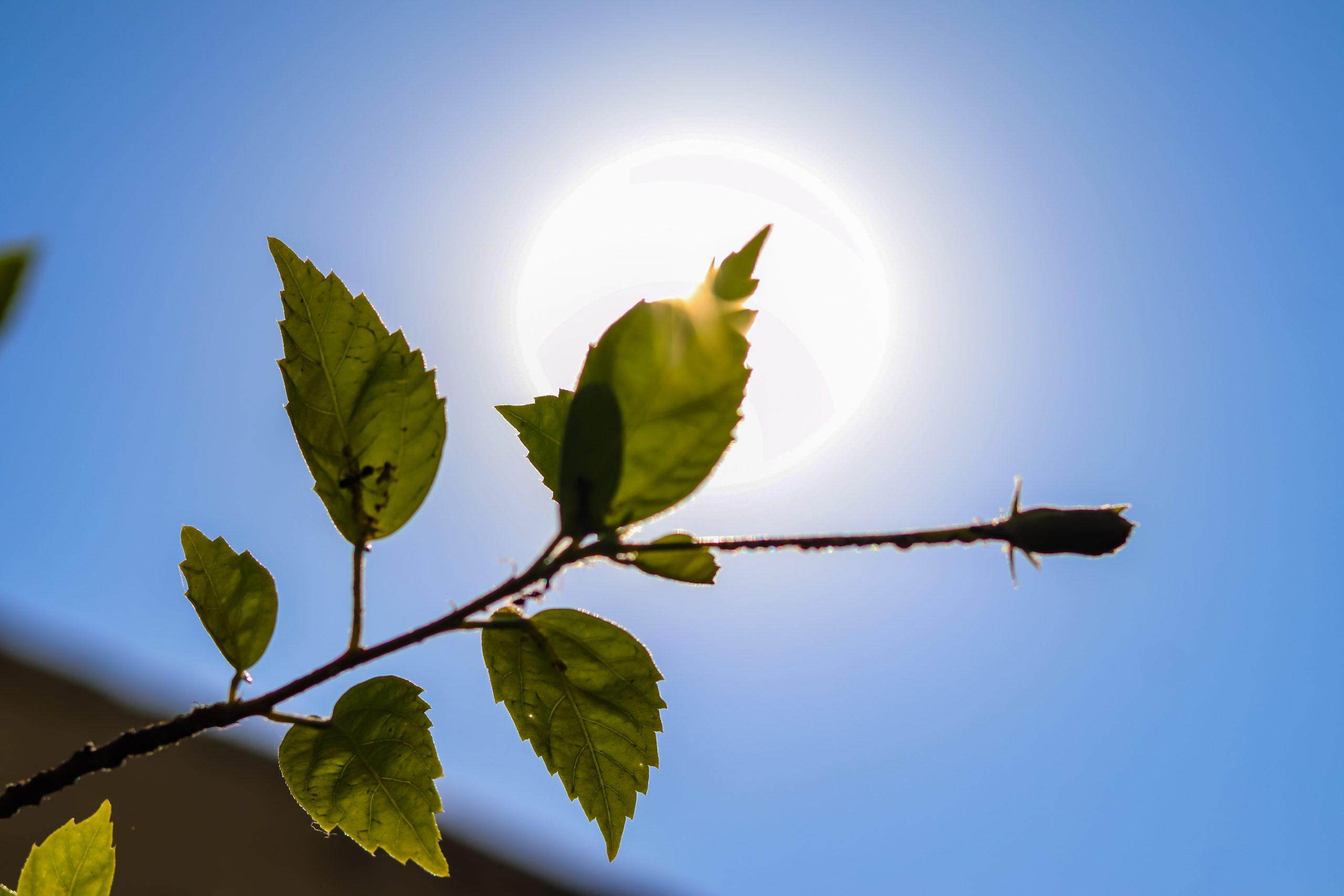 Plant under sunshine