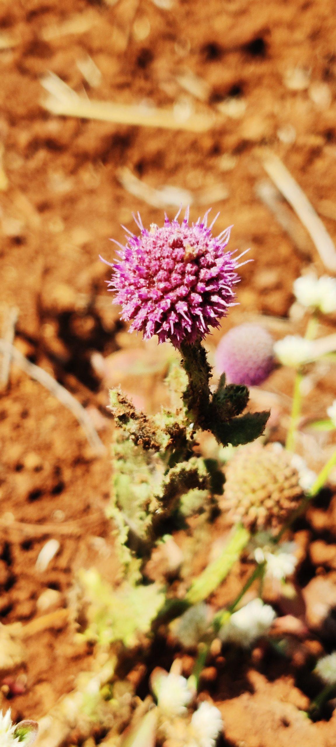 Tiny flower on plant