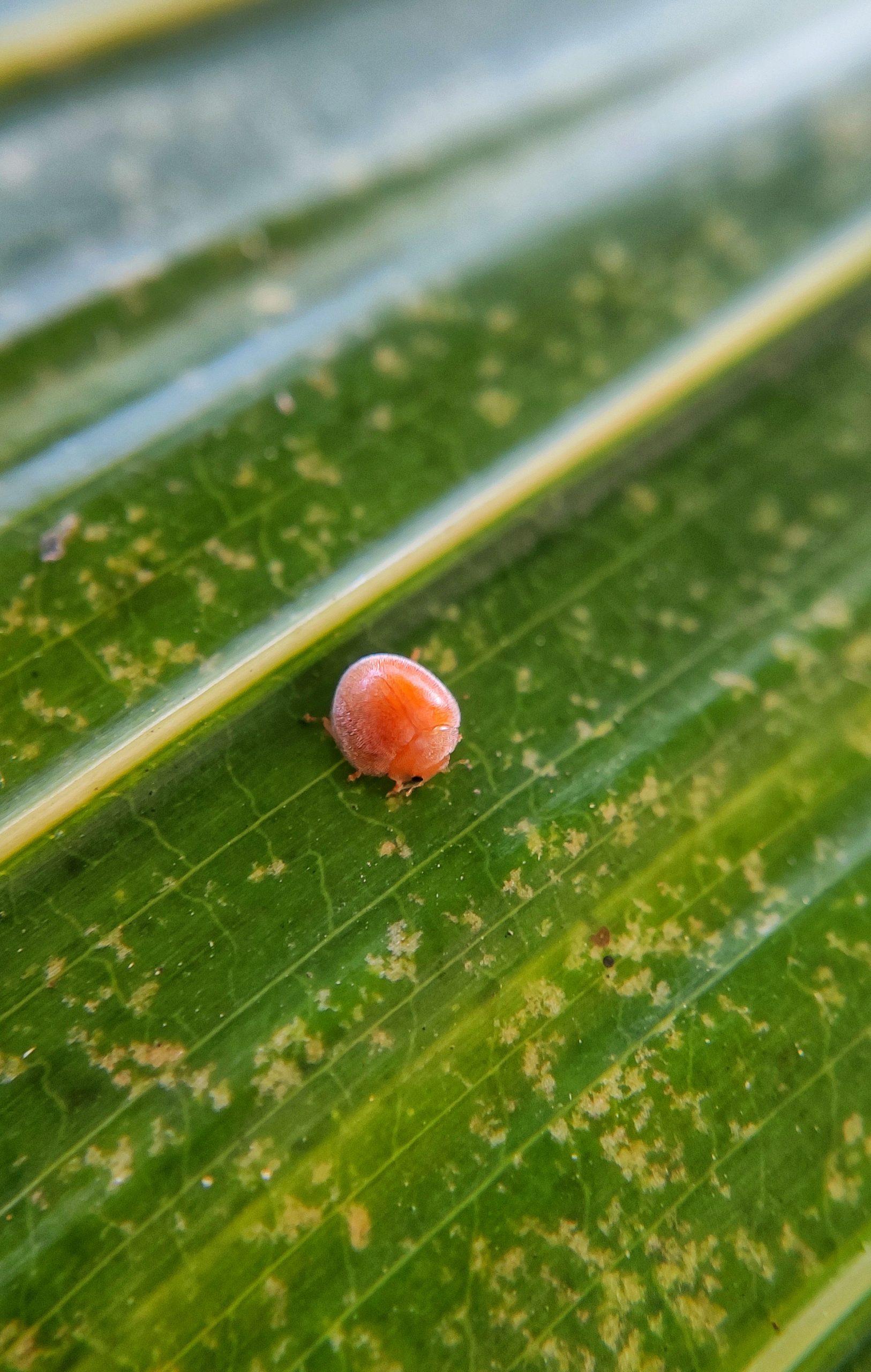 Tiny bug on leaf