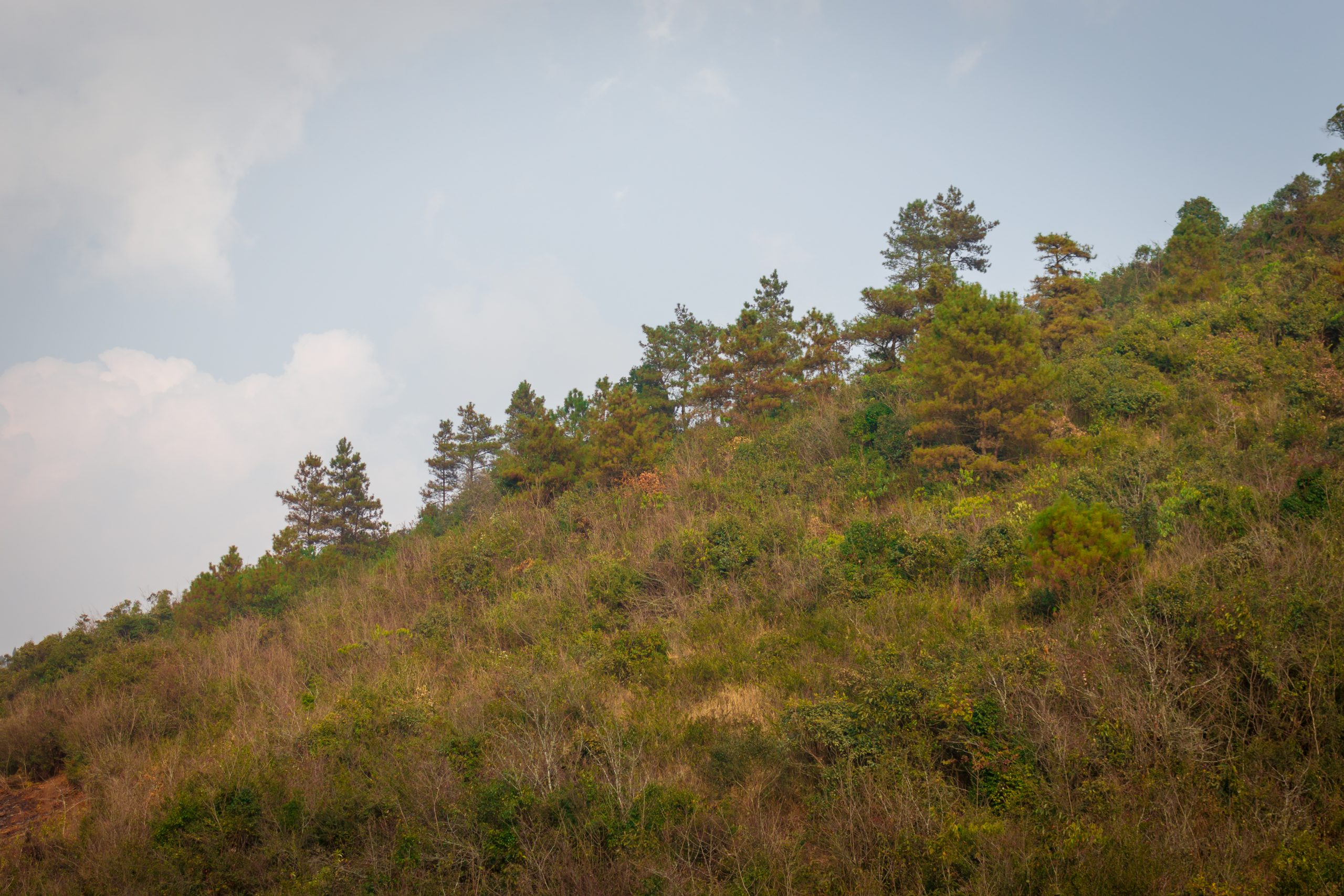 Trees and grass on a hill