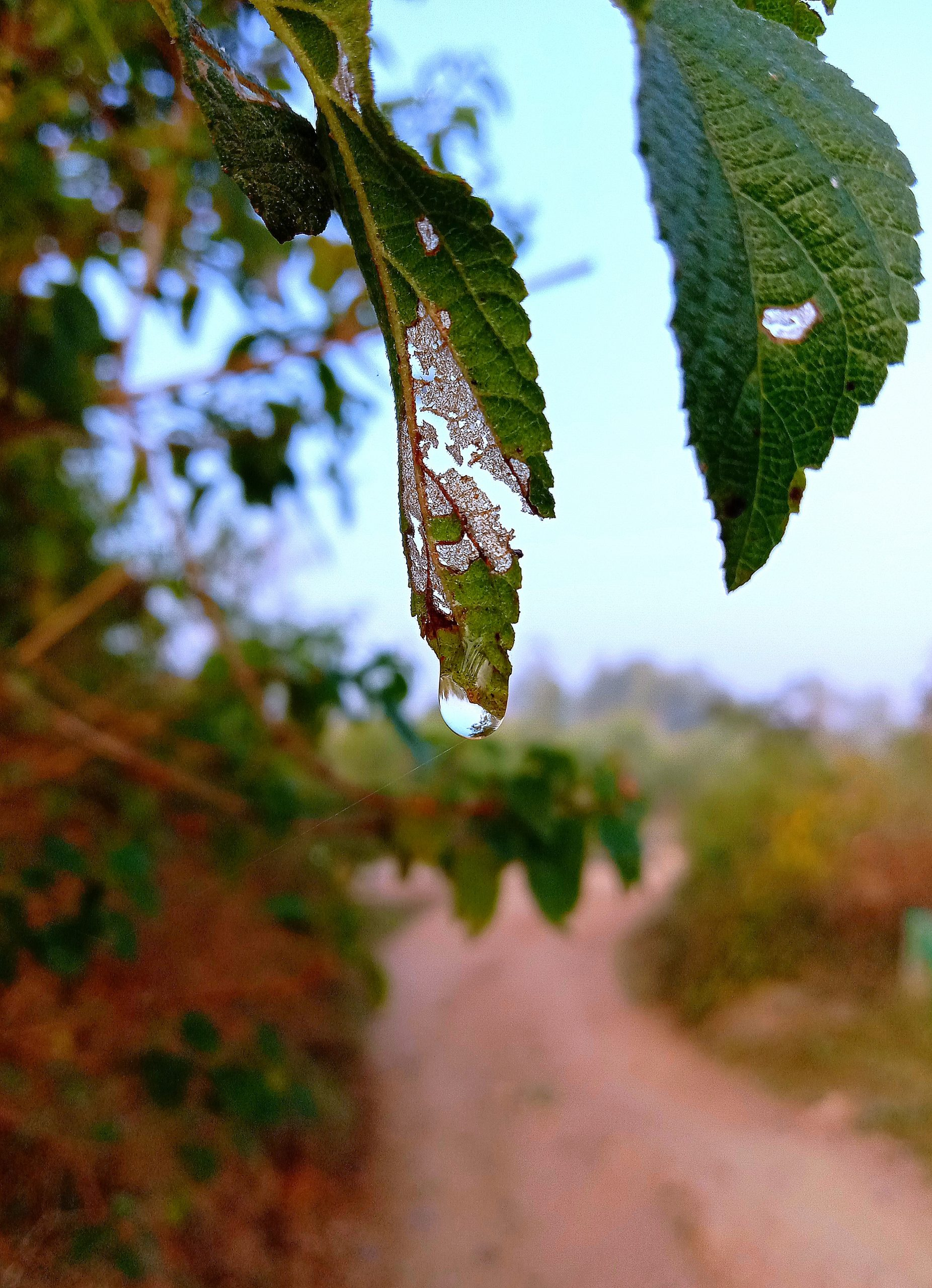 Water drop on plant leaf